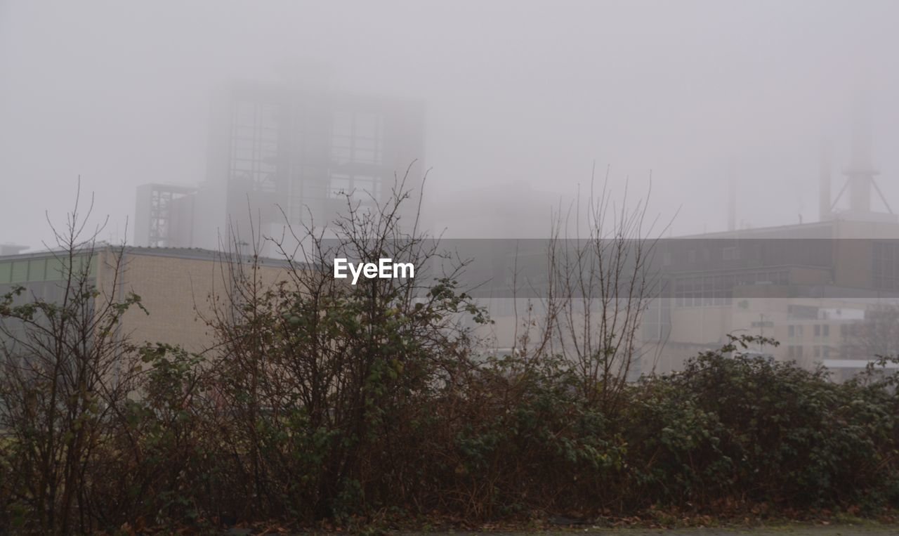 architecture, fog, building exterior, foggy, weather, mist, built structure, city, skyscraper, no people, outdoors, growth, day, modern, grass, cityscape, tree, sky, nature