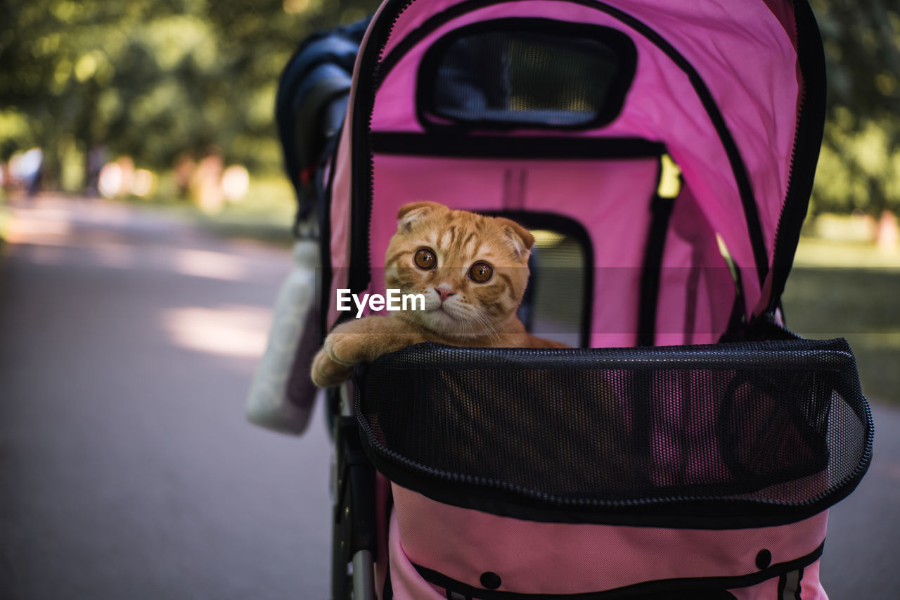 mammal, one animal, pets, domestic, domestic animals, focus on foreground, vertebrate, close-up, no people, cat, feline, day, looking at camera, seat, pink color, container, portrait, purple