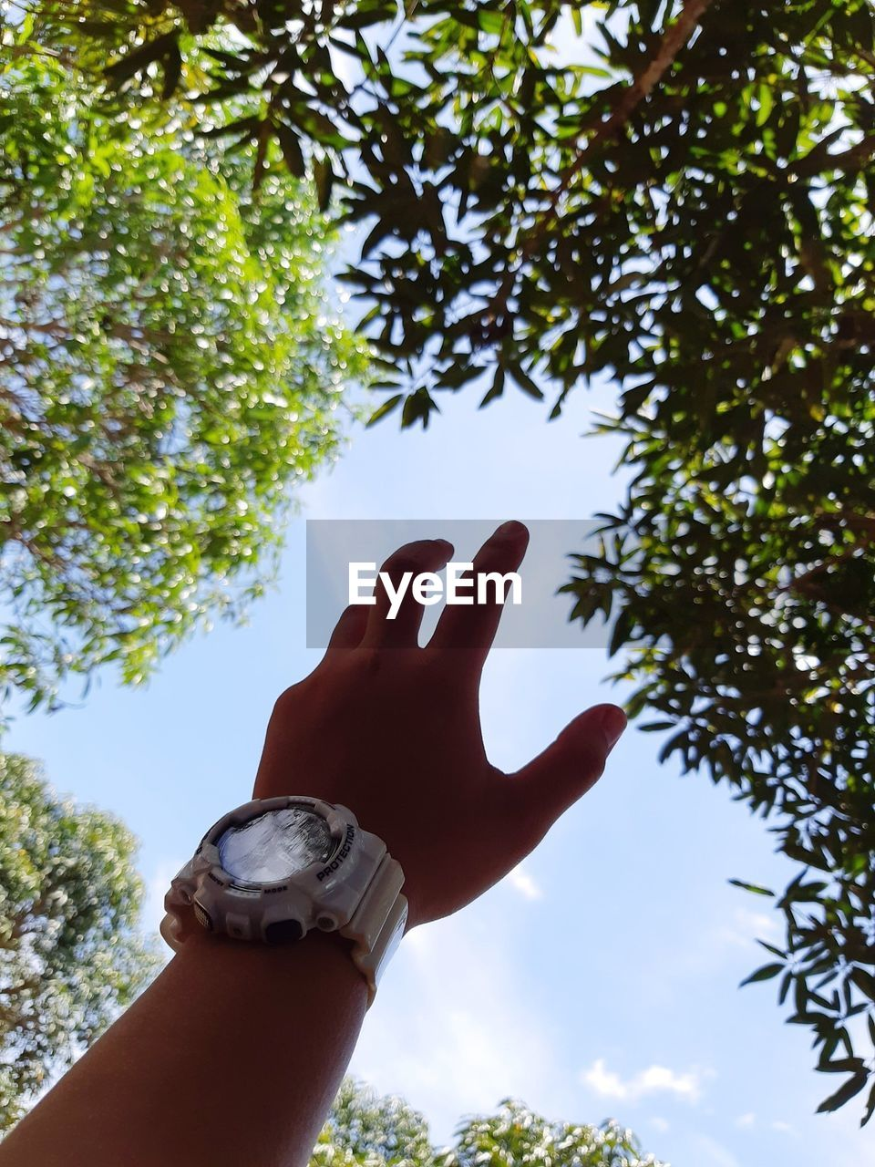 human hand, tree, hand, human body part, plant, low angle view, sky, nature, real people, one person, finger, day, body part, human finger, personal perspective, unrecognizable person, growth, outdoors, lifestyles, human limb