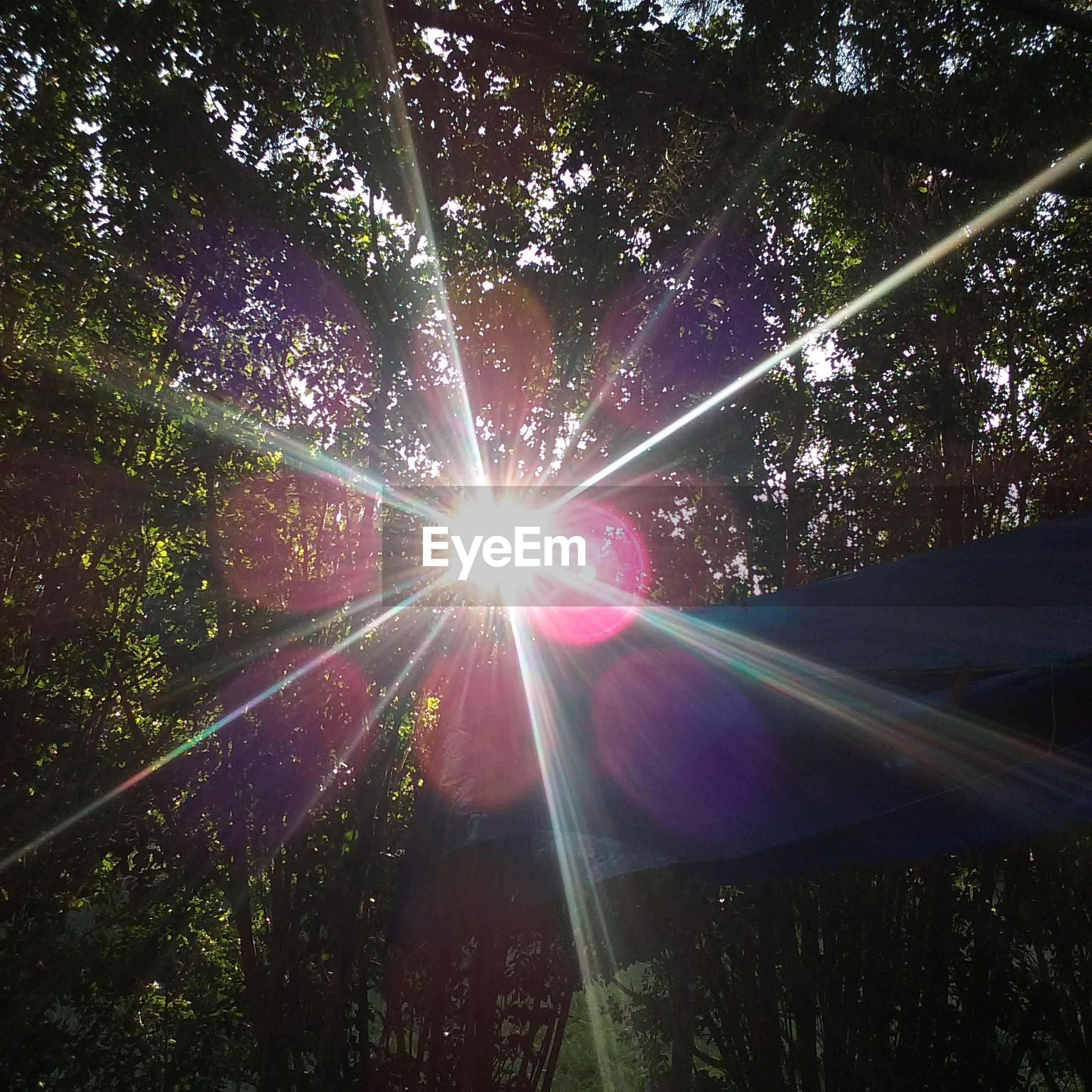 sunbeam, tree, lens flare, sunlight, sun, nature, growth, tranquility, beauty in nature, outdoors, low angle view, no people, day, forest