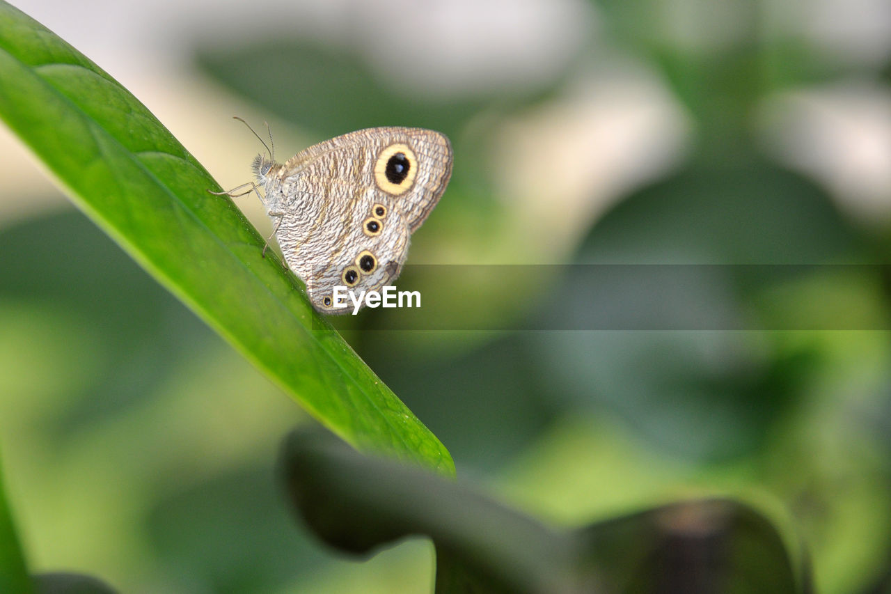 one animal, animals in the wild, animal themes, leaf, insect, green color, animal wildlife, day, close-up, nature, outdoors, focus on foreground, no people, plant