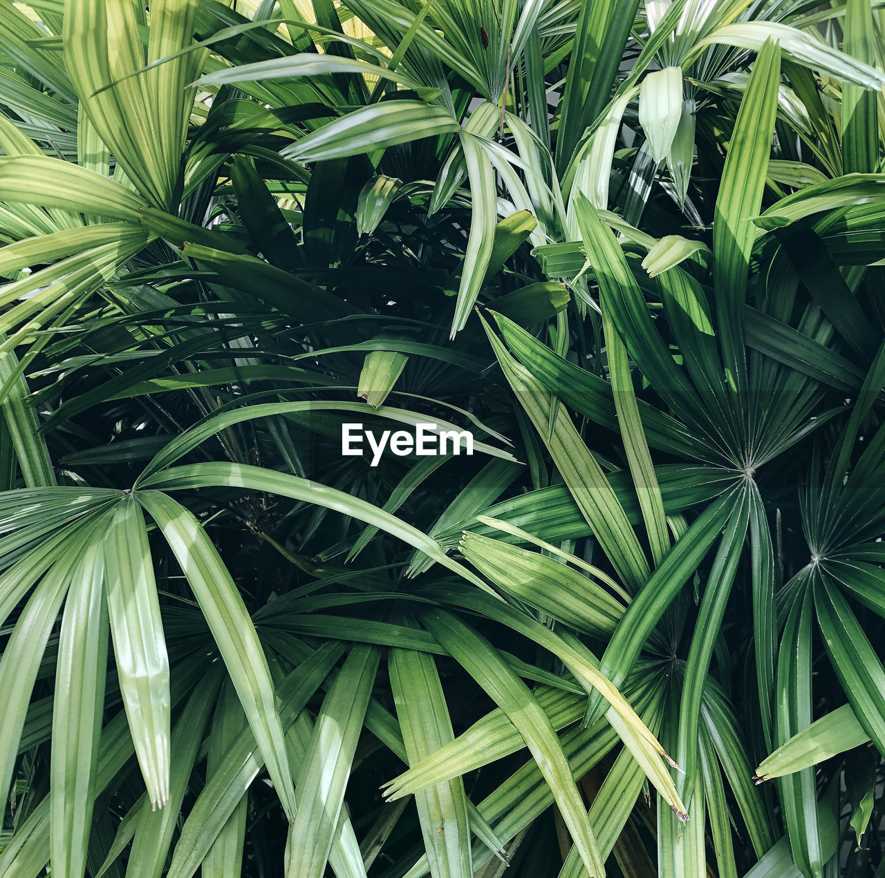 HIGH ANGLE VIEW OF BAMBOO PLANT