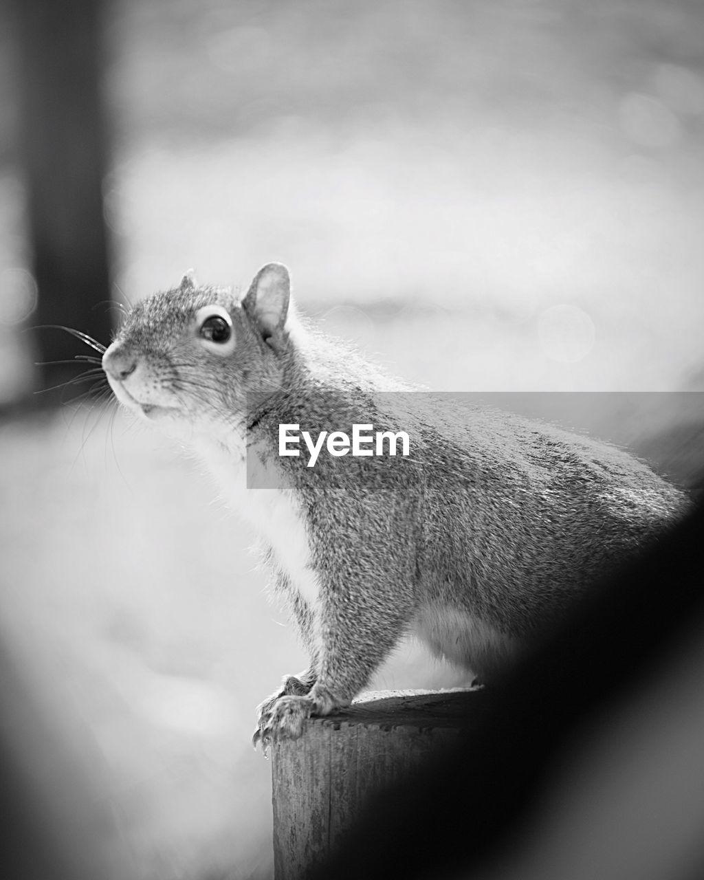 Close-Up Of Squirrel At Park