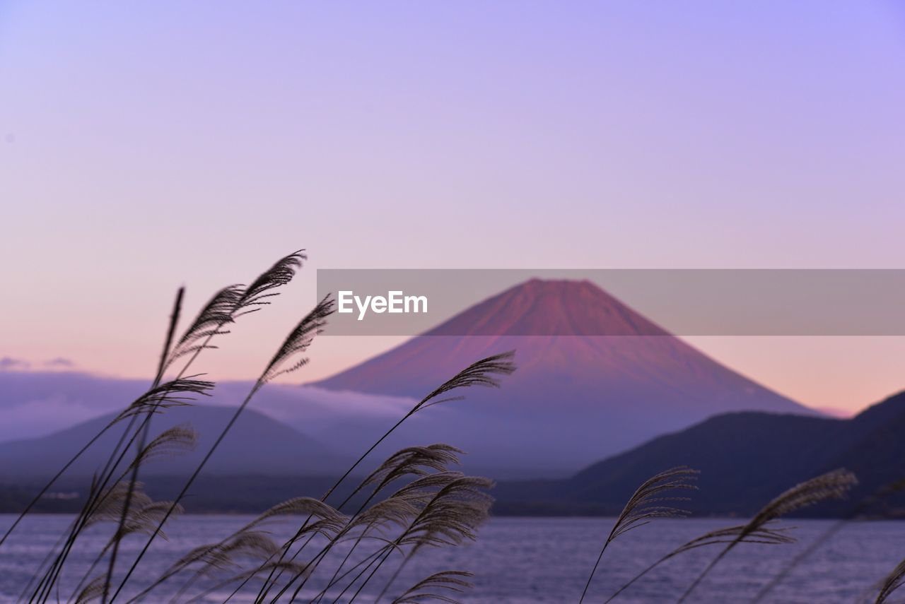 Reeds Growing By Lake With Mount Fuji Against Sky