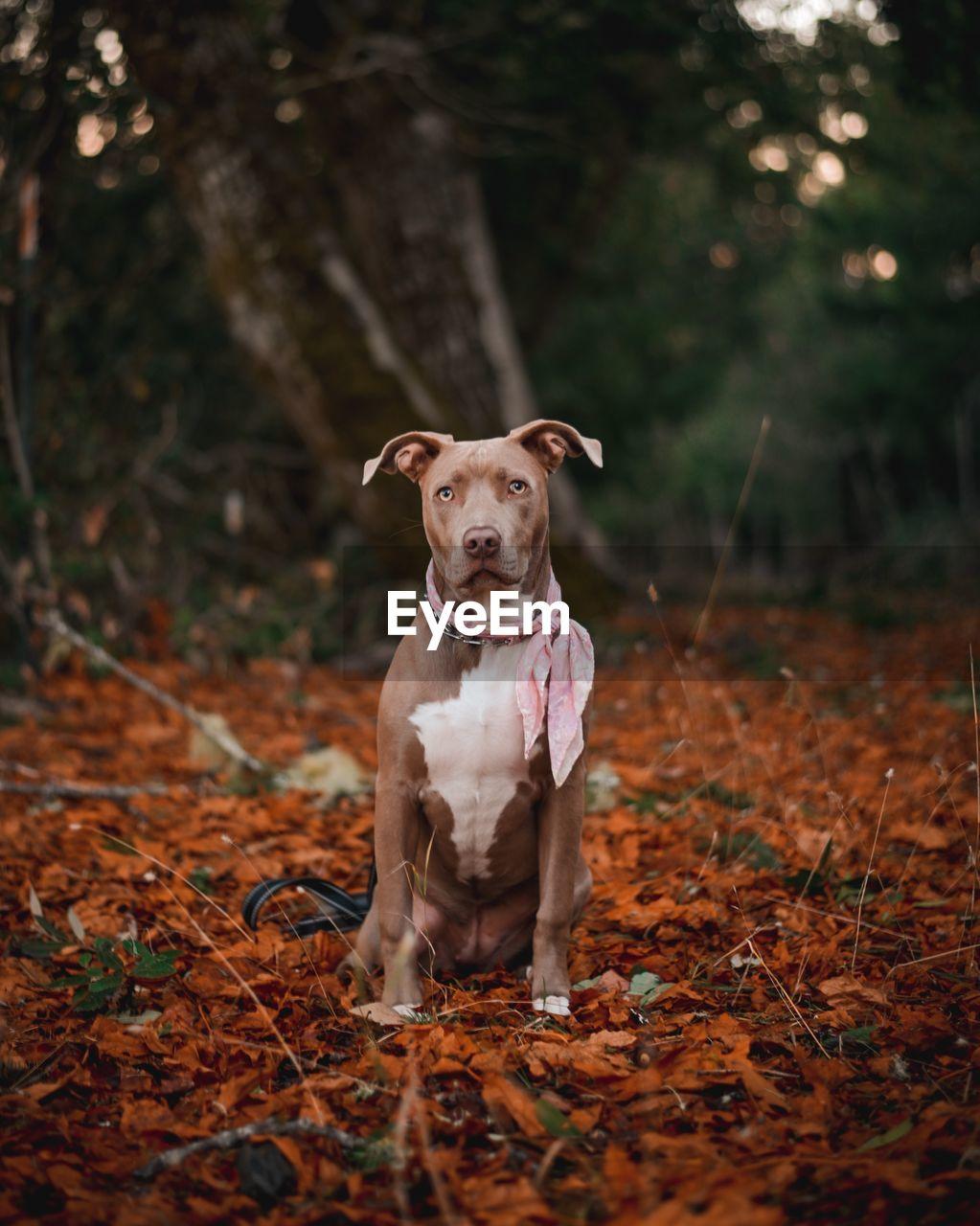 PORTRAIT OF DOG WEARING SUNGLASSES ON LAND