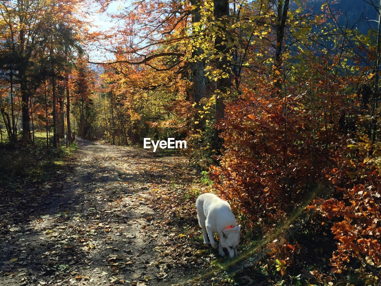 tree, autumn, nature, change, one animal, animal themes, leaf, day, forest, growth, beauty in nature, tranquility, pets, domestic animals, dog, tranquil scene, scenics, outdoors, no people, branch, mammal