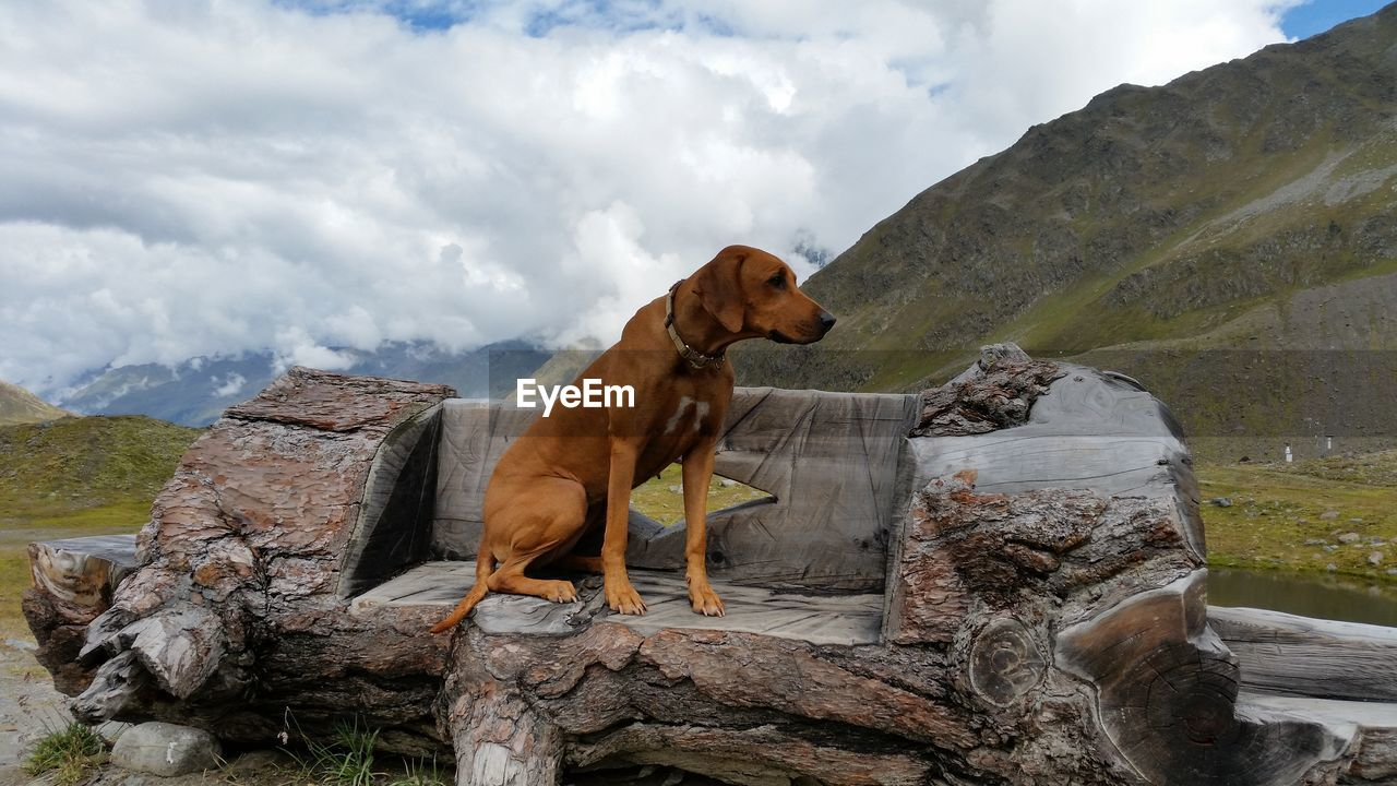 animal themes, mammal, animal, one animal, domestic animals, vertebrate, cloud - sky, pets, mountain, domestic, canine, dog, sky, no people, nature, solid, day, rock, rock - object, wood - material
