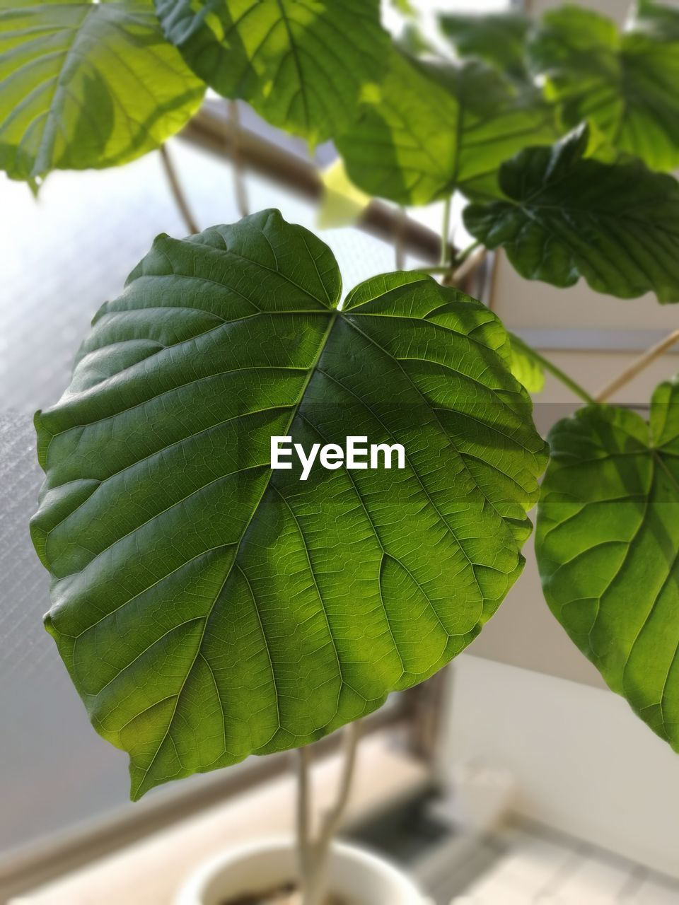 leaf, green color, close-up, day, growth, nature, plant, no people, freshness, beauty in nature, outdoors
