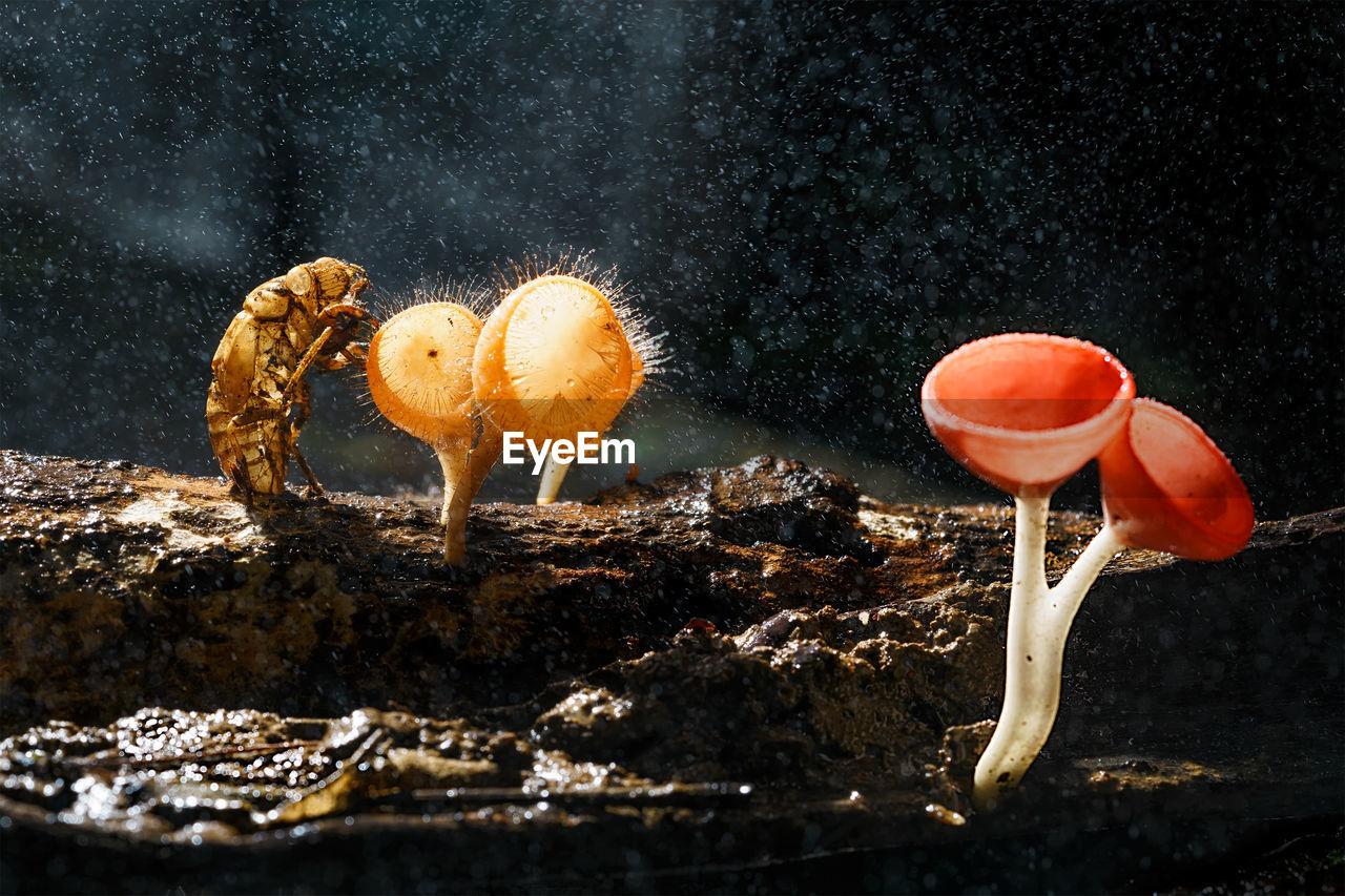 Close-Up Of Cicada By Mushrooms On Wood