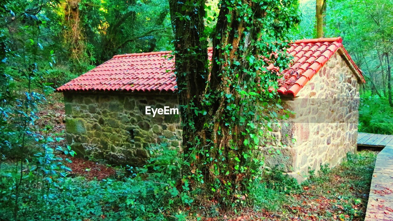 architecture, house, building exterior, built structure, outdoors, no people, day, green color, tree, roof, nature, grass