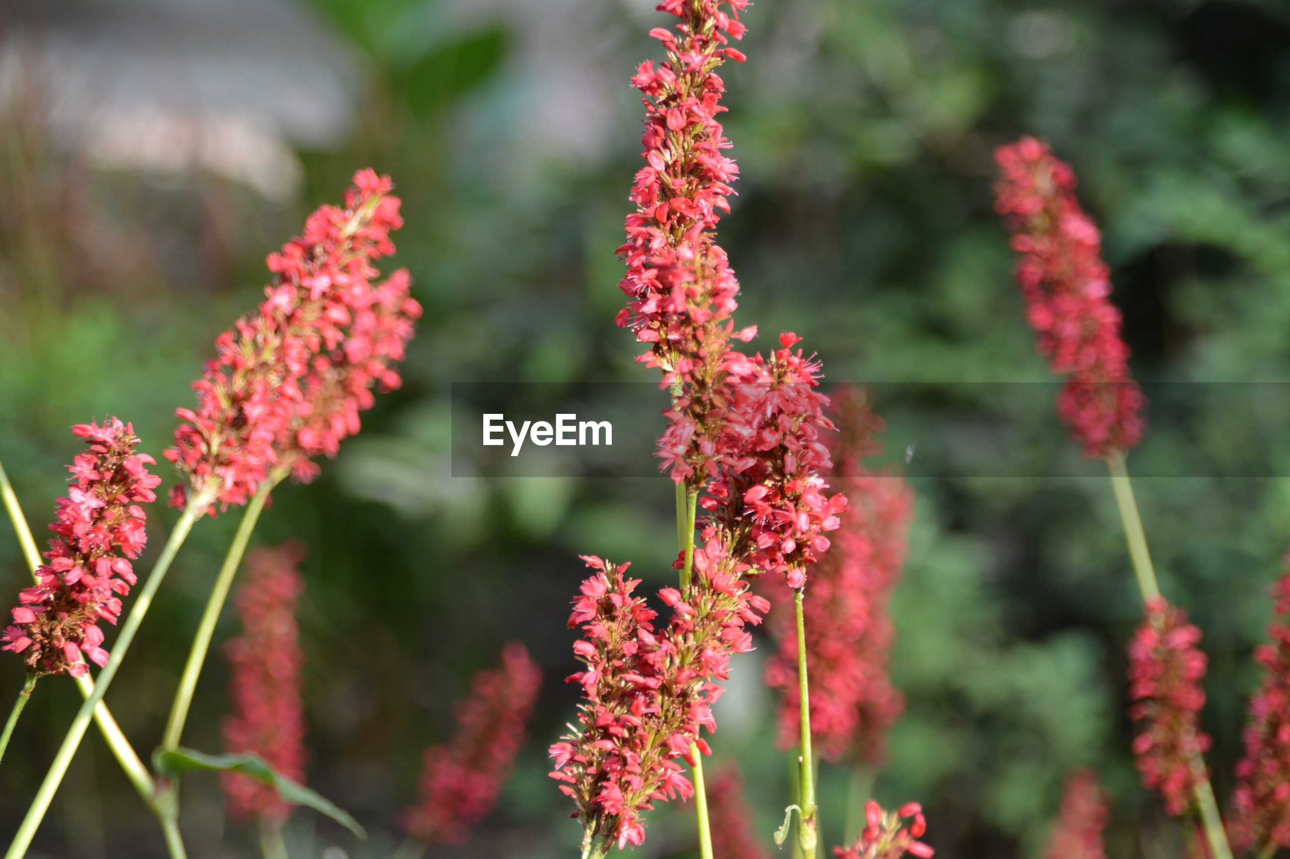 growth, nature, flower, plant, beauty in nature, focus on foreground, no people, day, red, outdoors, fragility, close-up, freshness, blooming