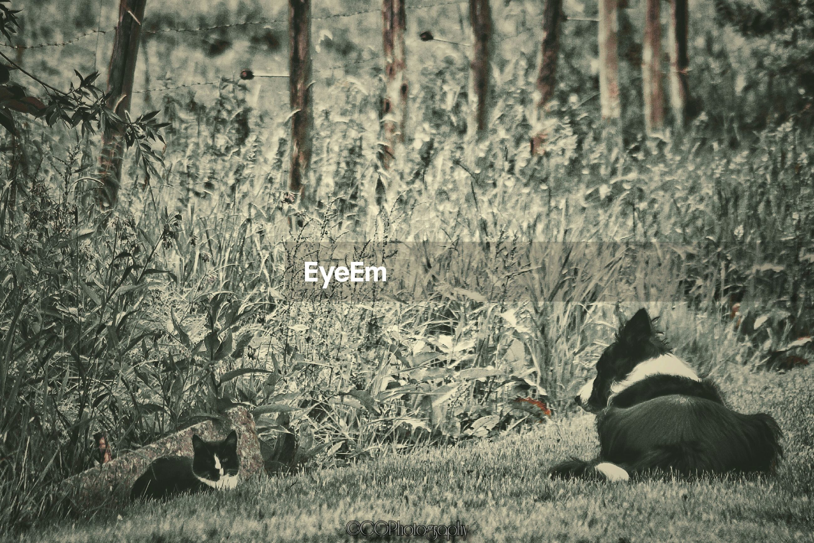 Dog and cat sitting on grassy field