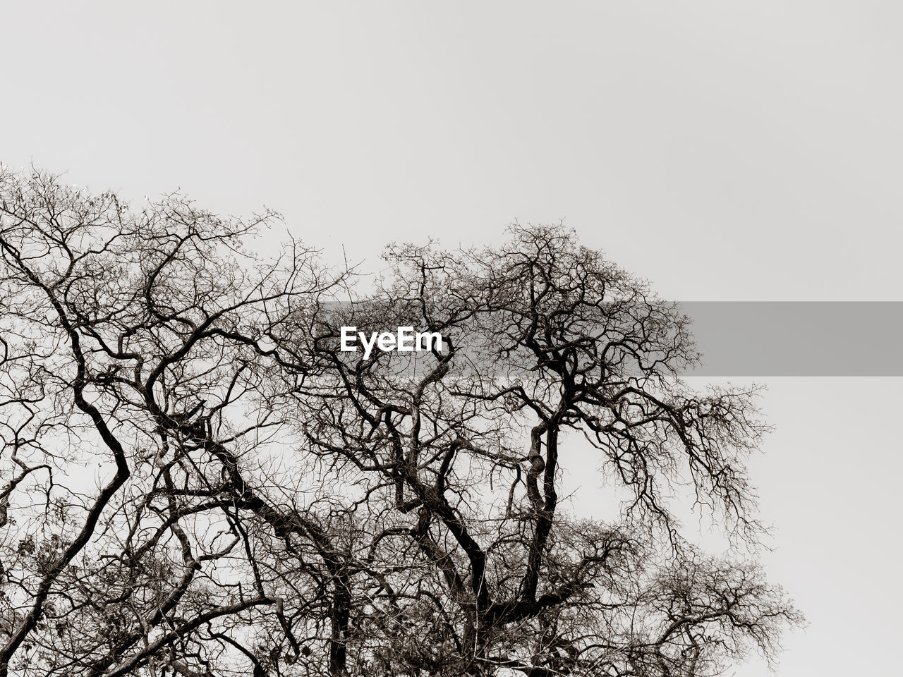 sky, tree, plant, clear sky, low angle view, branch, no people, bare tree, nature, tranquility, day, copy space, beauty in nature, outdoors, growth, scenics - nature, tranquil scene, silhouette, non-urban scene, tree canopy