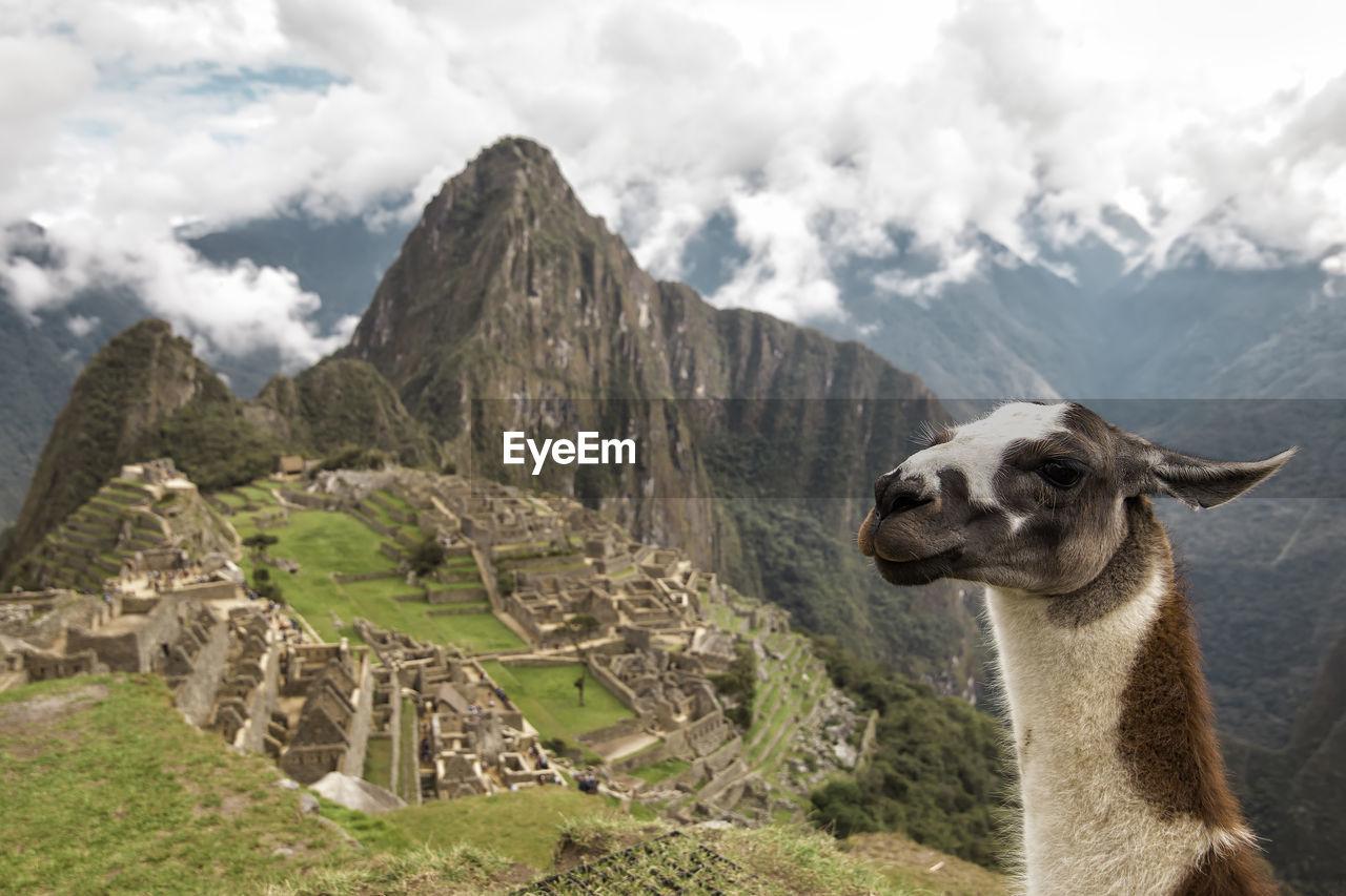 High angle view of llama against machu picchu