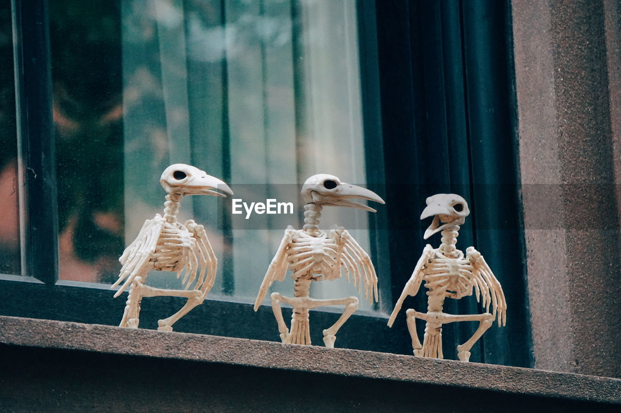 Close-up of bird skeletons on window sill