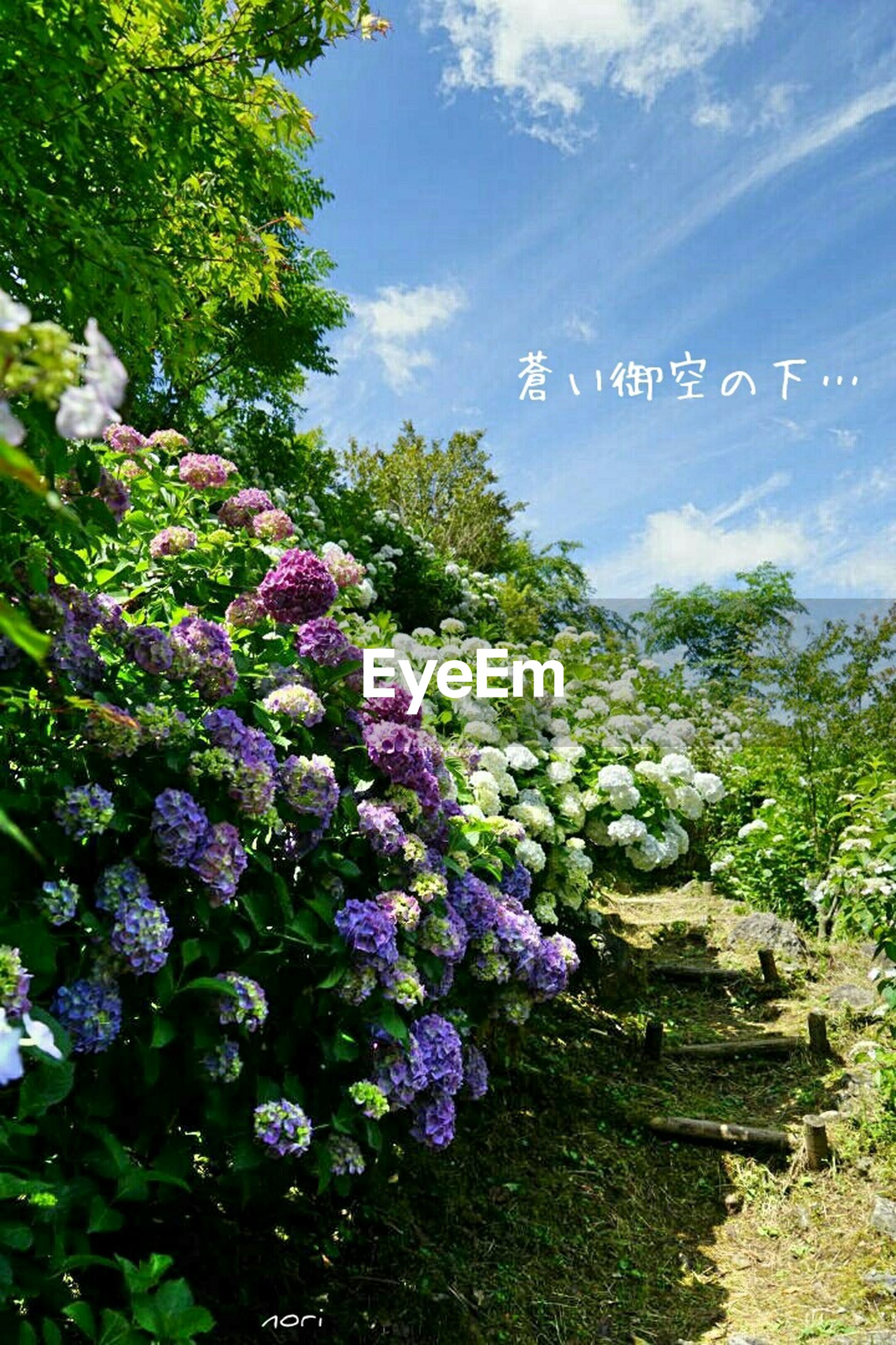 flower, growth, tree, plant, beauty in nature, freshness, nature, green color, blue, sky, day, blooming, sunlight, tranquility, outdoors, fragility, growing, leaf, no people, purple