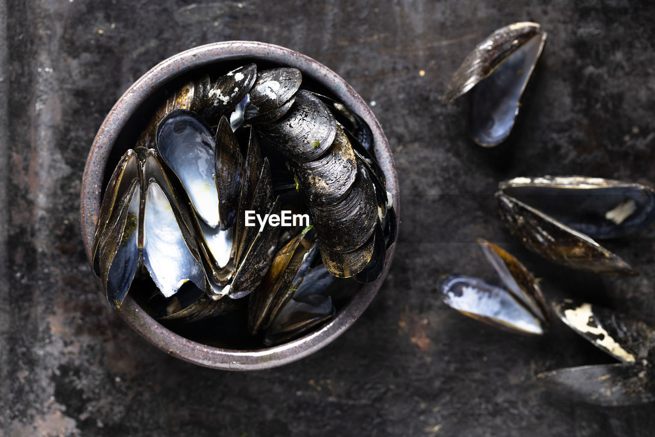 CLOSE-UP VIEW OF FISH