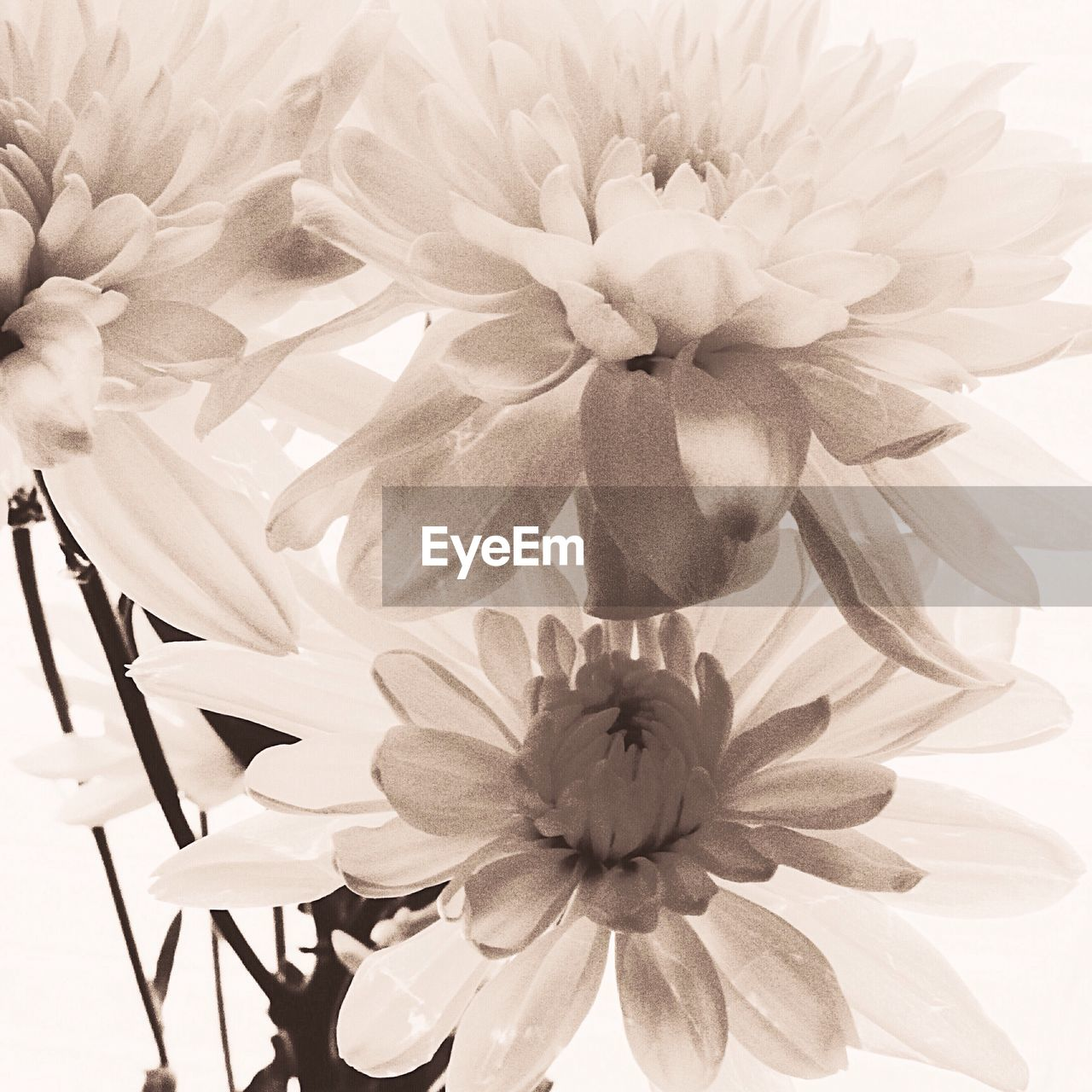 flower, petal, fragility, beauty in nature, flower head, freshness, nature, no people, growth, close-up, plant, indoors, day