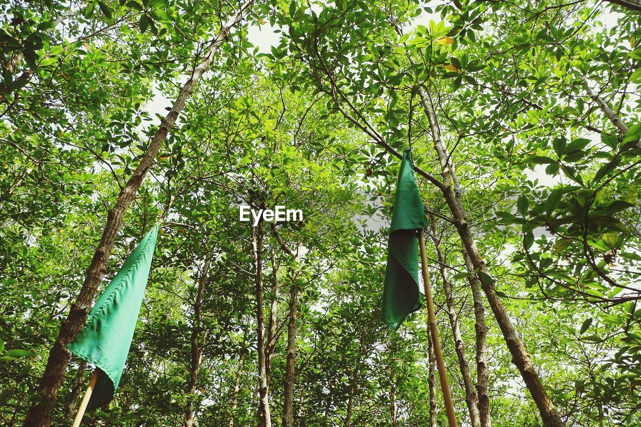 LOW ANGLE VIEW OF BAMBOO HANGING ON TREE IN FOREST