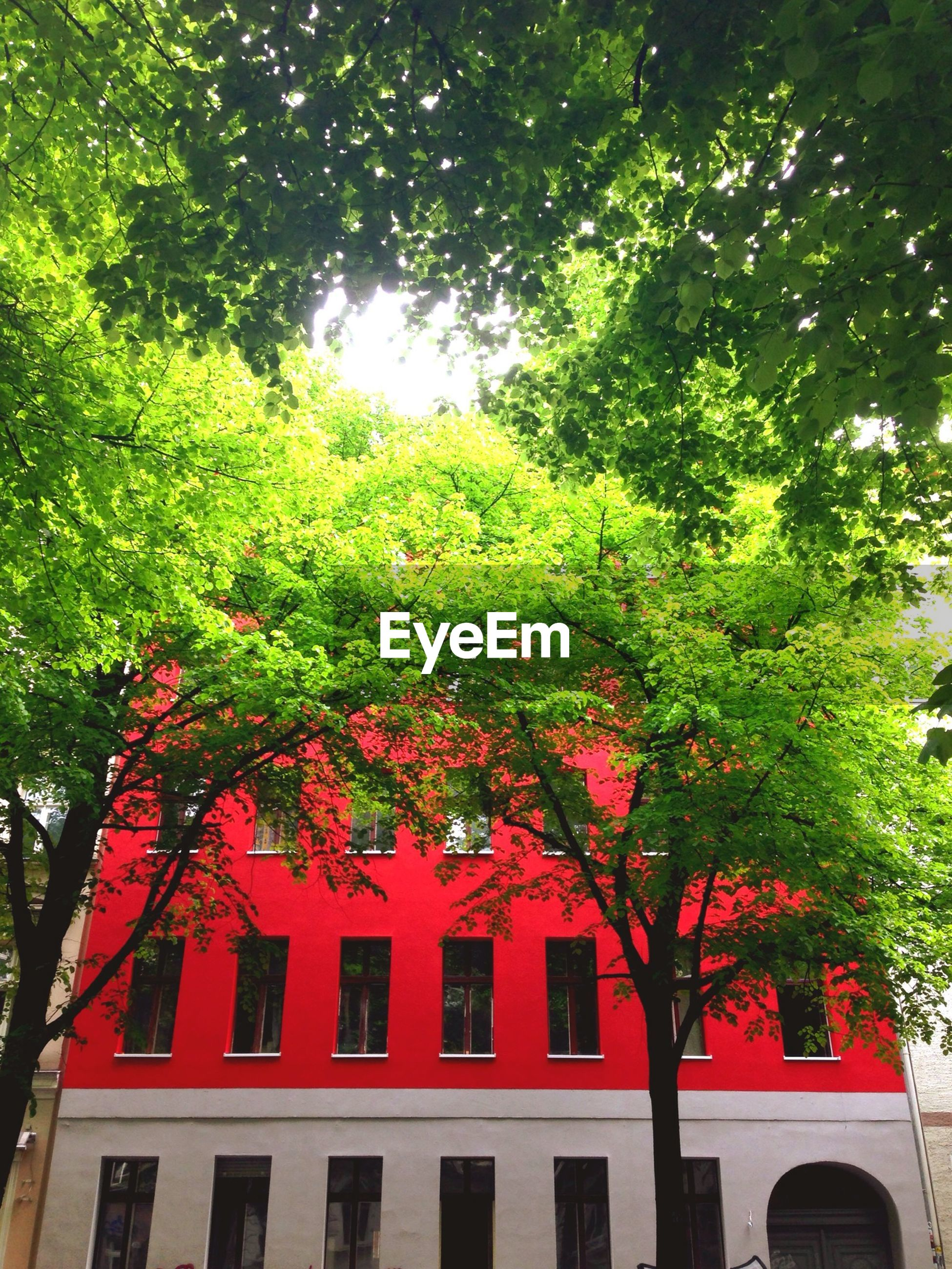 tree, growth, branch, architecture, building exterior, built structure, green color, nature, low angle view, red, house, window, day, outdoors, leaf, no people, lush foliage, sky, plant, beauty in nature