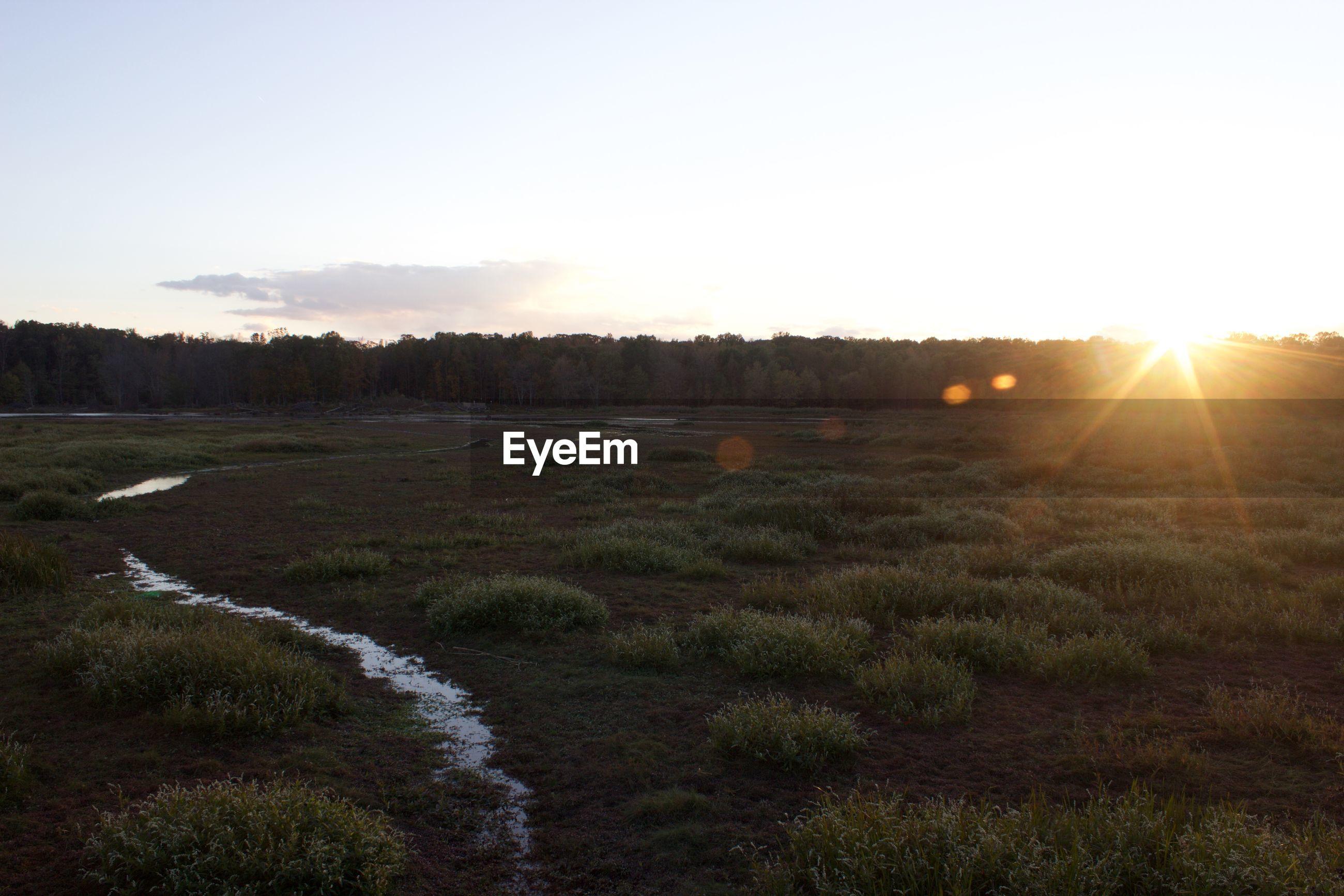 SUNSET OVER GRASSY FIELD