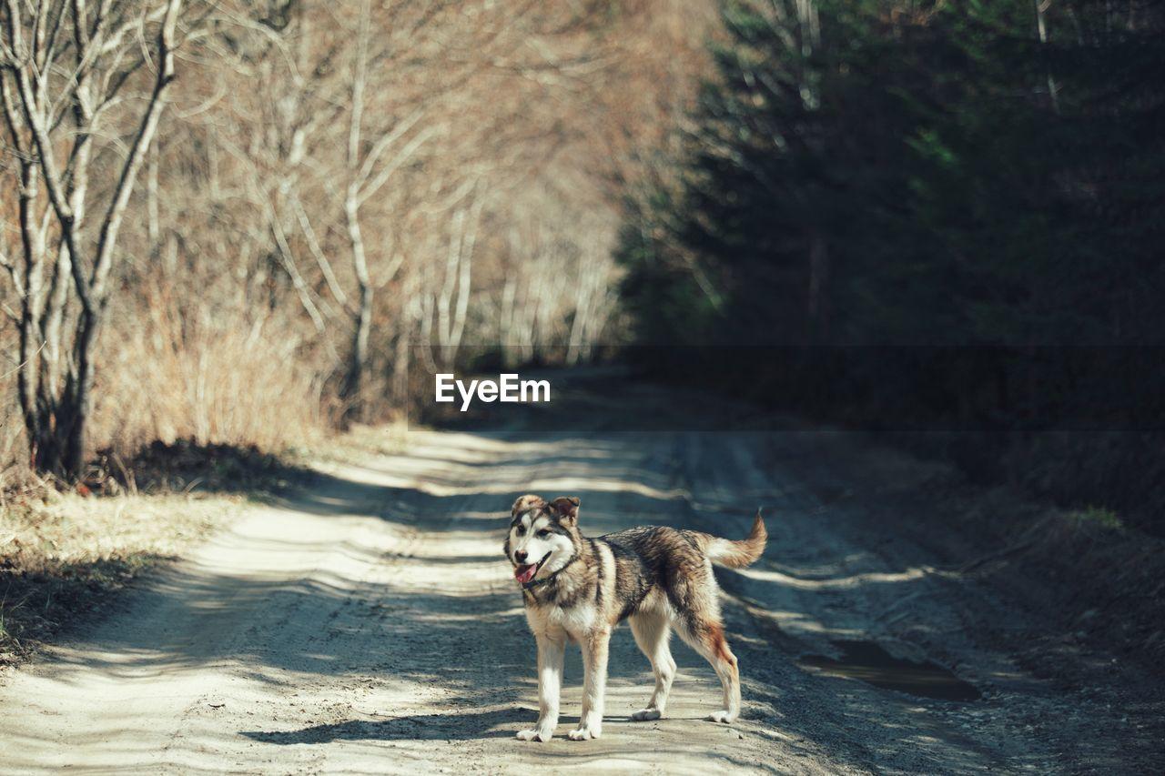 Dog On Dirt Road