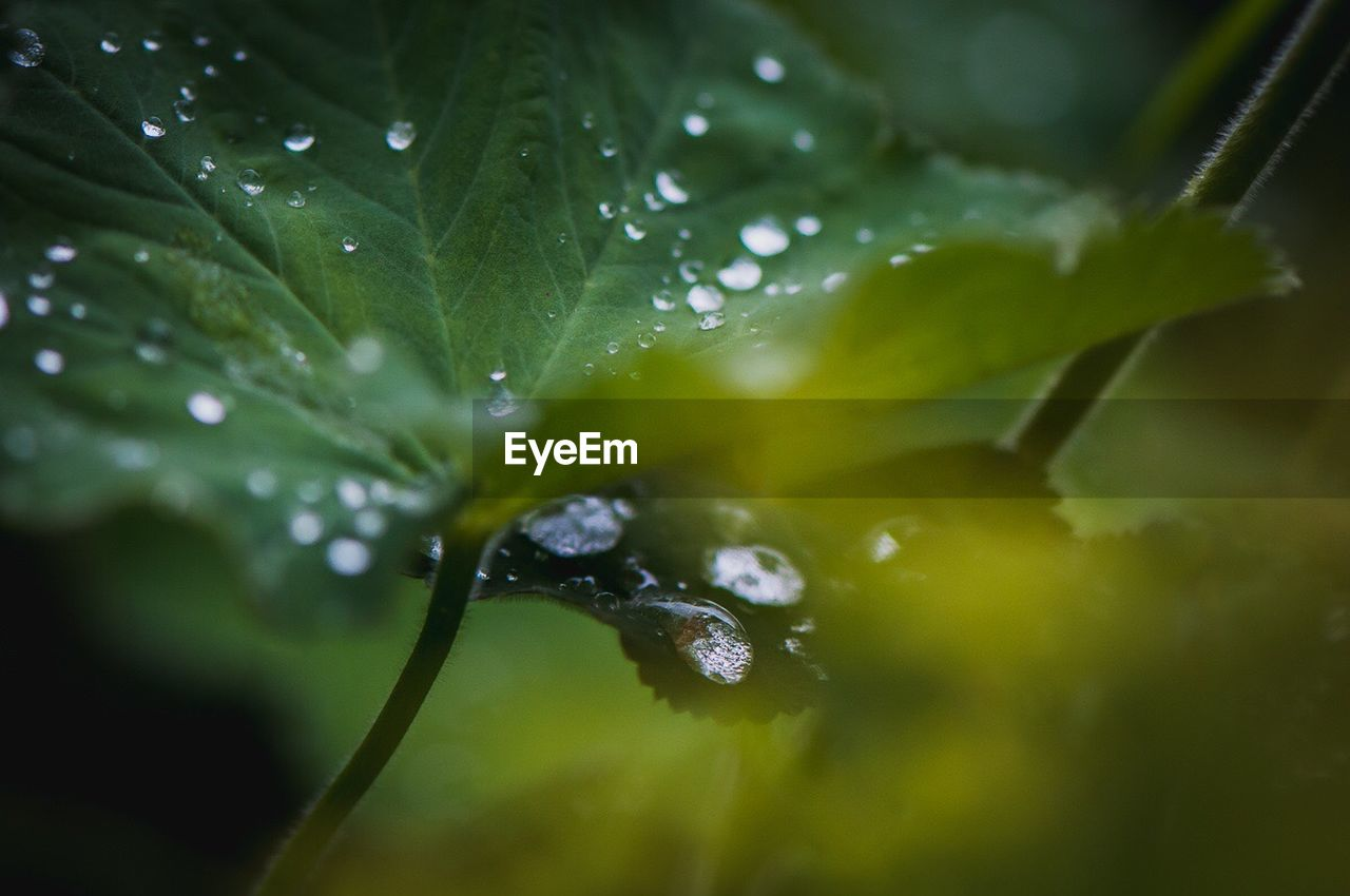drop, water, wet, leaf, raindrop, rain, nature, freshness, droplet, close-up, selective focus, green color, water drop, purity, plant, beauty in nature, growth, no people, fragility, day, outdoors