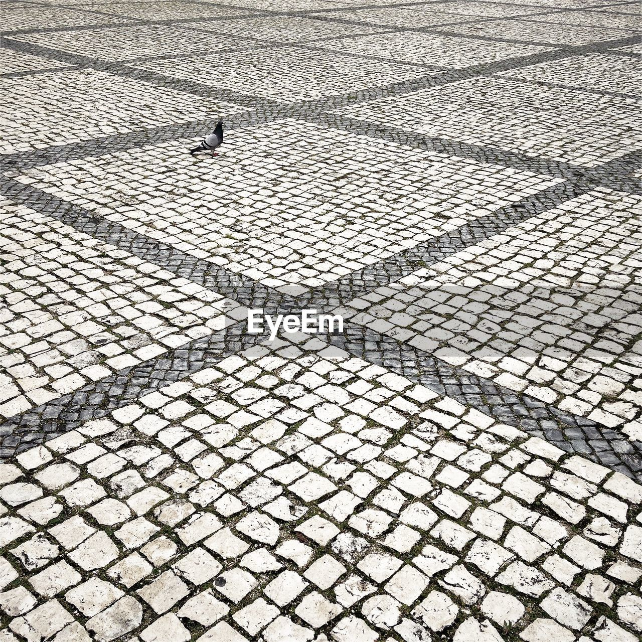 High angle view of pigeon on pathway