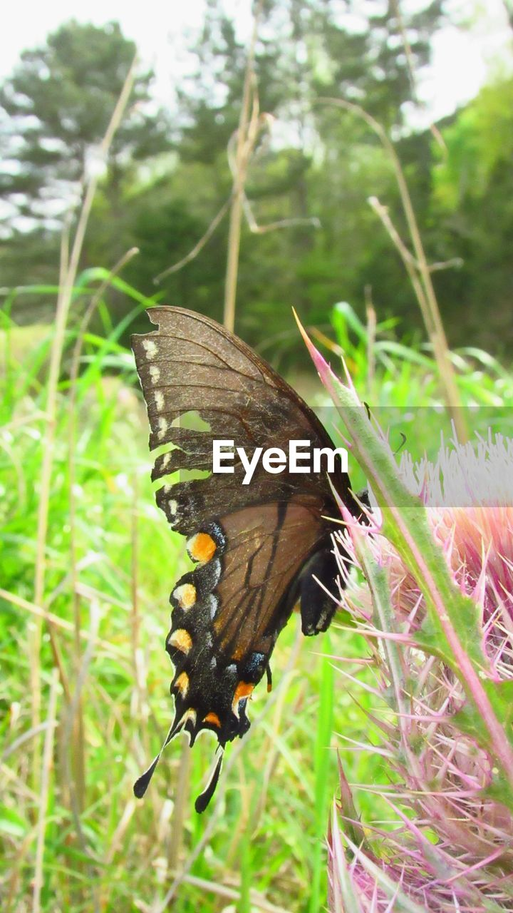 plant, animal themes, animal, invertebrate, animal wildlife, insect, animals in the wild, one animal, nature, beauty in nature, animal wing, green color, butterfly - insect, grass, growth, close-up, focus on foreground, day, flower, no people, butterfly