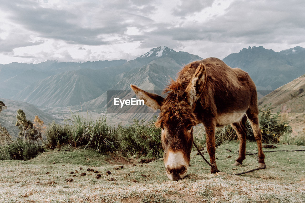 Donkey Grazing On Field Against Mountains
