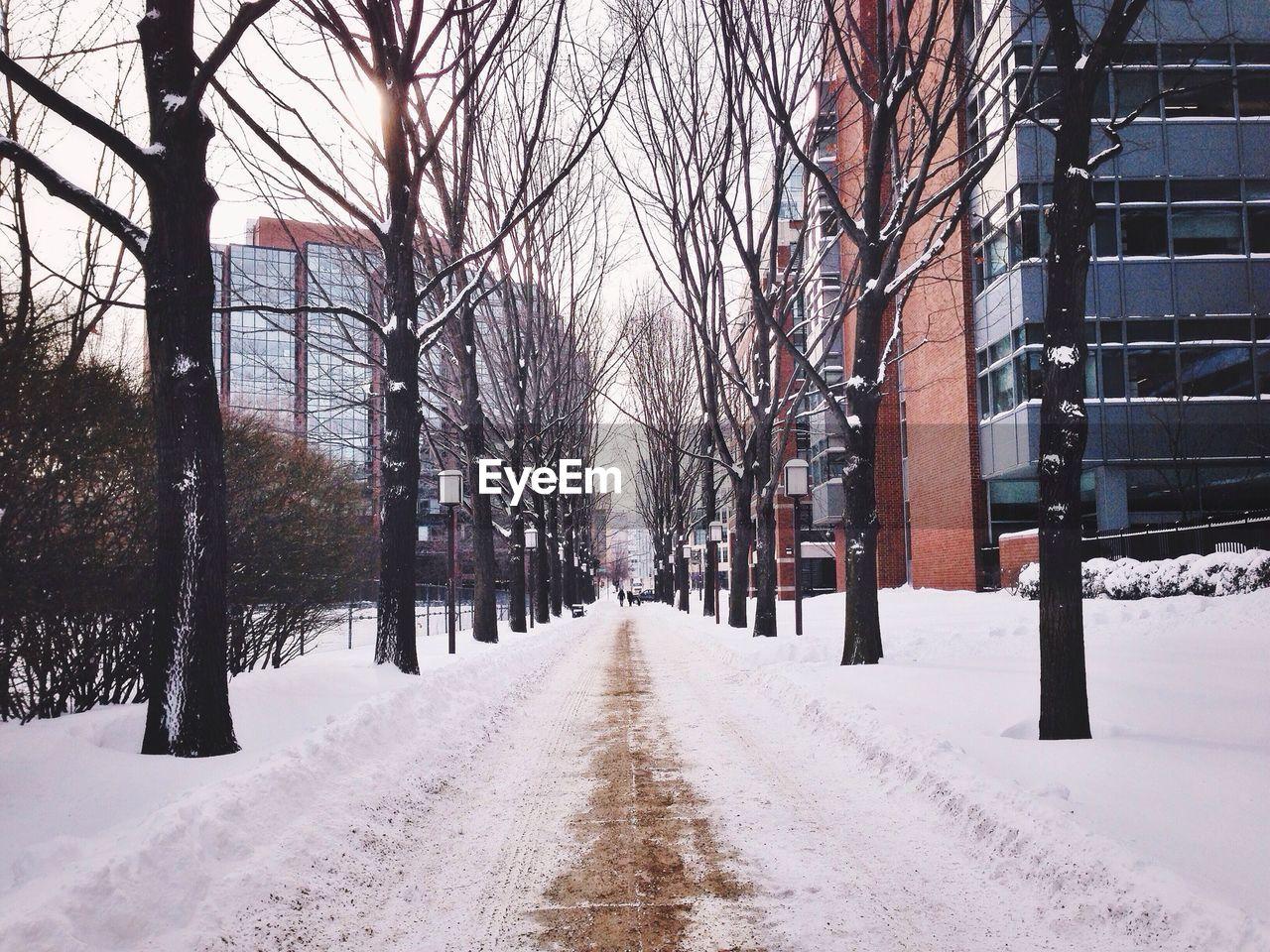 Snow covered treelined empty road