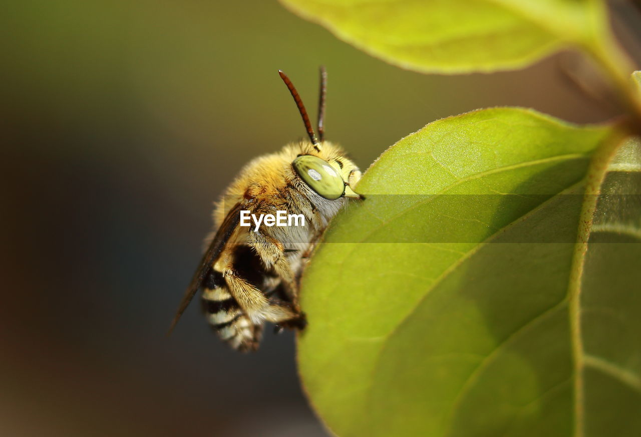 invertebrate, one animal, insect, animal, animal themes, animal wildlife, animals in the wild, leaf, plant part, close-up, selective focus, no people, green color, nature, plant, day, growth, animal body part, zoology, beauty in nature