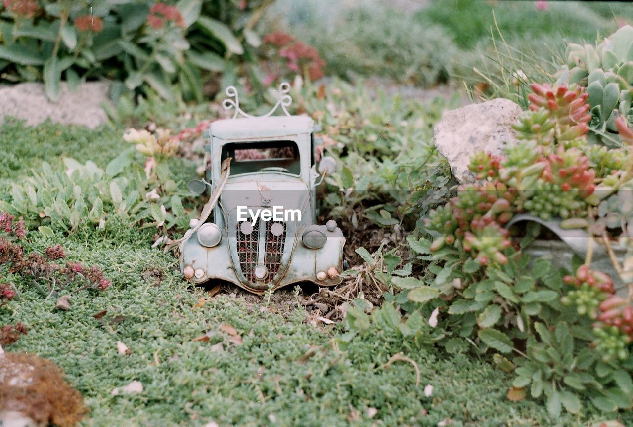 View of car on grass