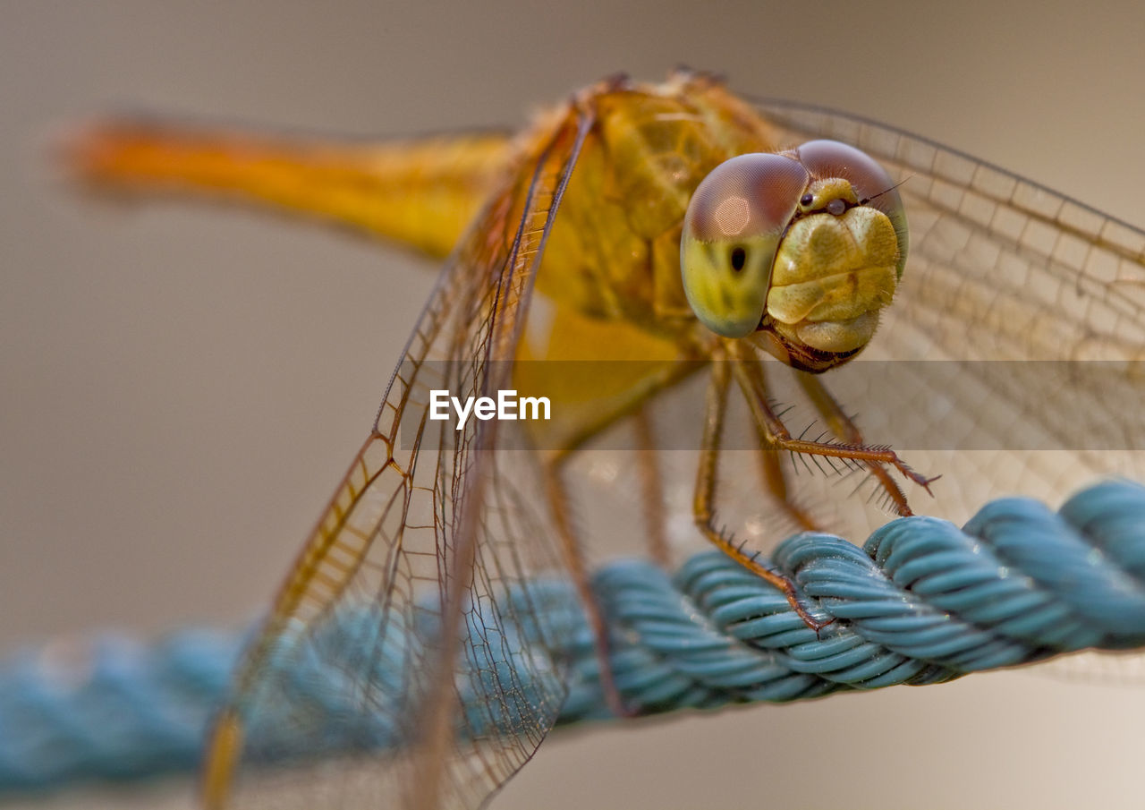 invertebrate, animal themes, animal, insect, animals in the wild, animal wildlife, one animal, animal wing, close-up, dragonfly, focus on foreground, nature, day, outdoors, no people, animal body part, selective focus, yellow, spider, zoology, animal eye