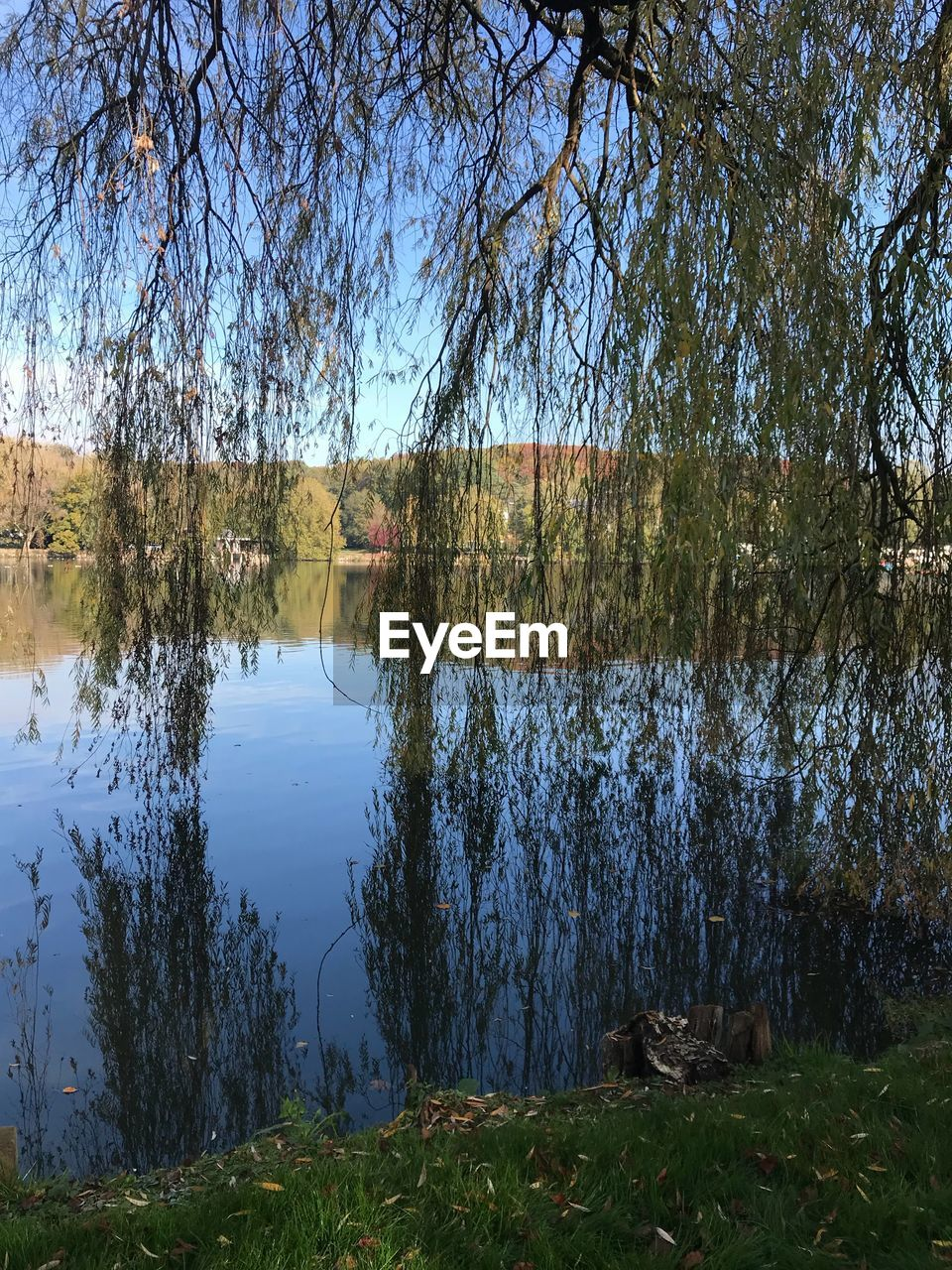 water, plant, reflection, tree, tranquility, lake, tranquil scene, scenics - nature, no people, beauty in nature, nature, growth, day, sky, non-urban scene, forest, land, landscape, lakeshore, outdoors