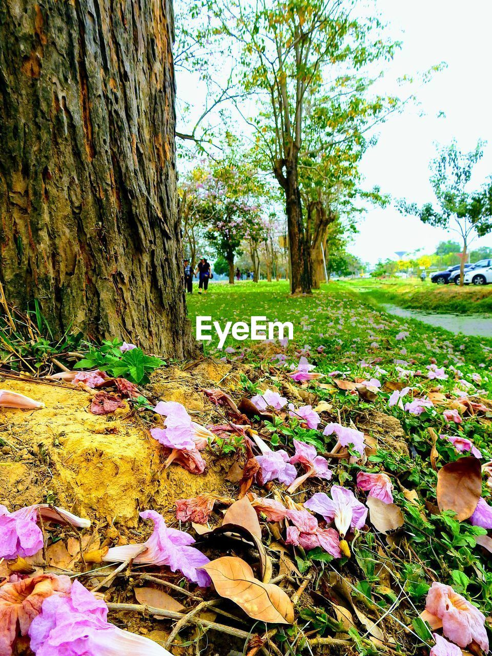 nature, real people, tree, growth, flower, beauty in nature, day, outdoors, grass, field, one person, leaf, men, tranquility, tree trunk, lifestyles, women, fragility, freshness, flower head, crocus, people