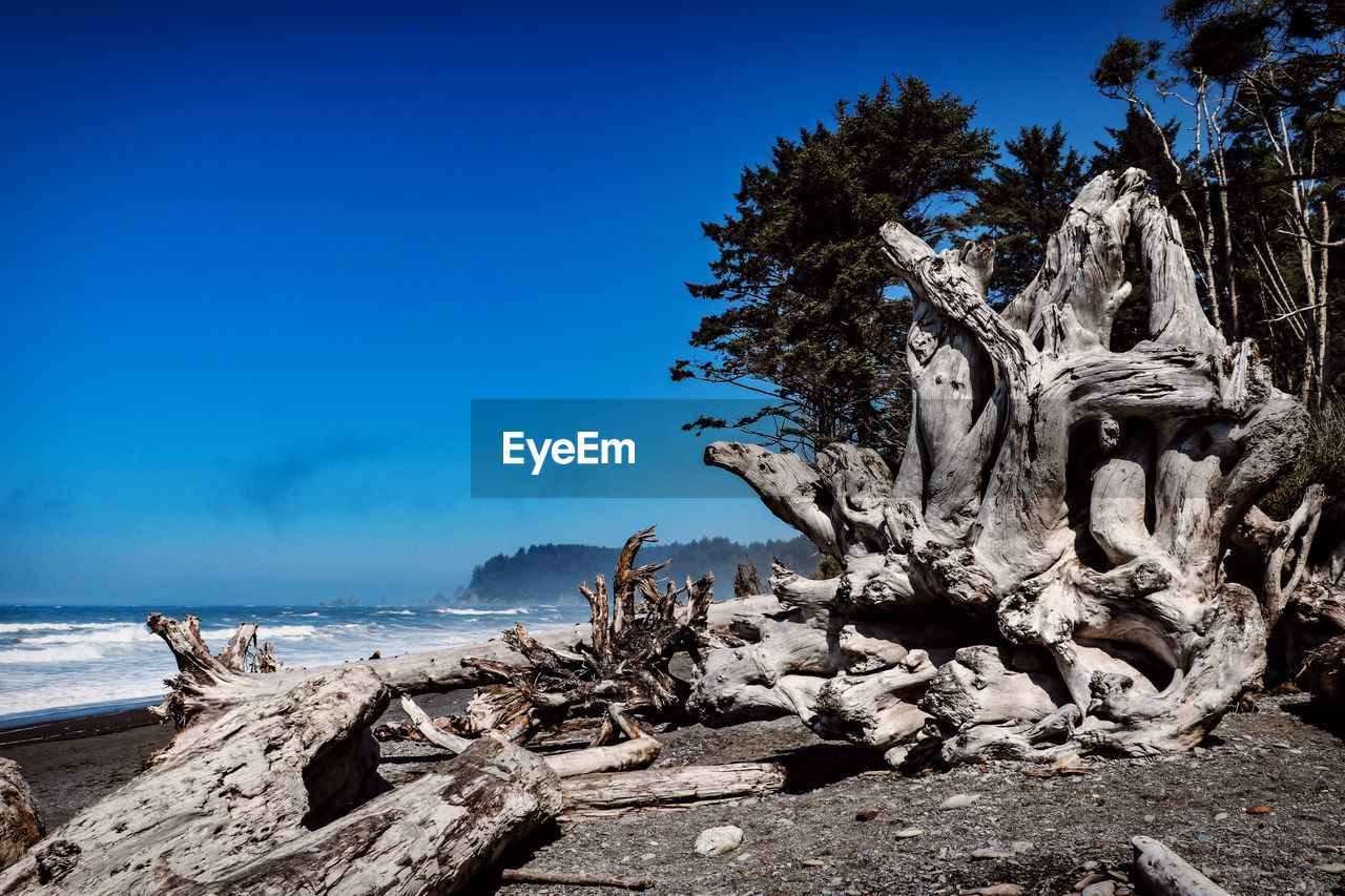 sky, tree, sea, water, nature, land, solid, beach, tranquility, beauty in nature, scenics - nature, rock, plant, blue, day, rock - object, no people, tranquil scene, clear sky, horizon over water, driftwood