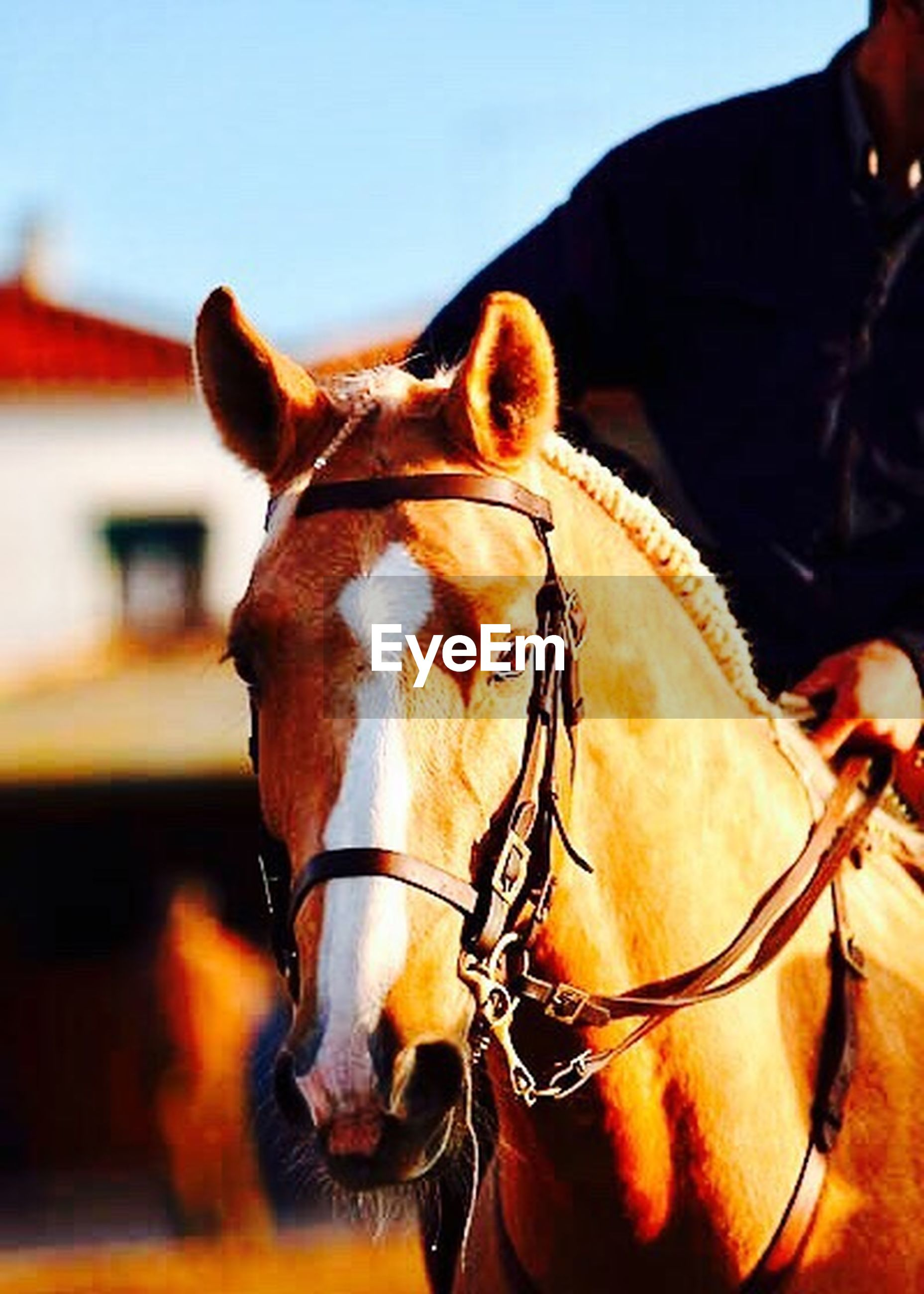 horse, mammal, animal themes, domestic animals, one animal, focus on foreground, herbivorous, close-up, animal body part, day, sky, no people, outdoors, nature