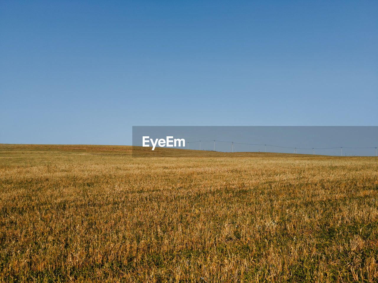FIELD AGAINST CLEAR SKY