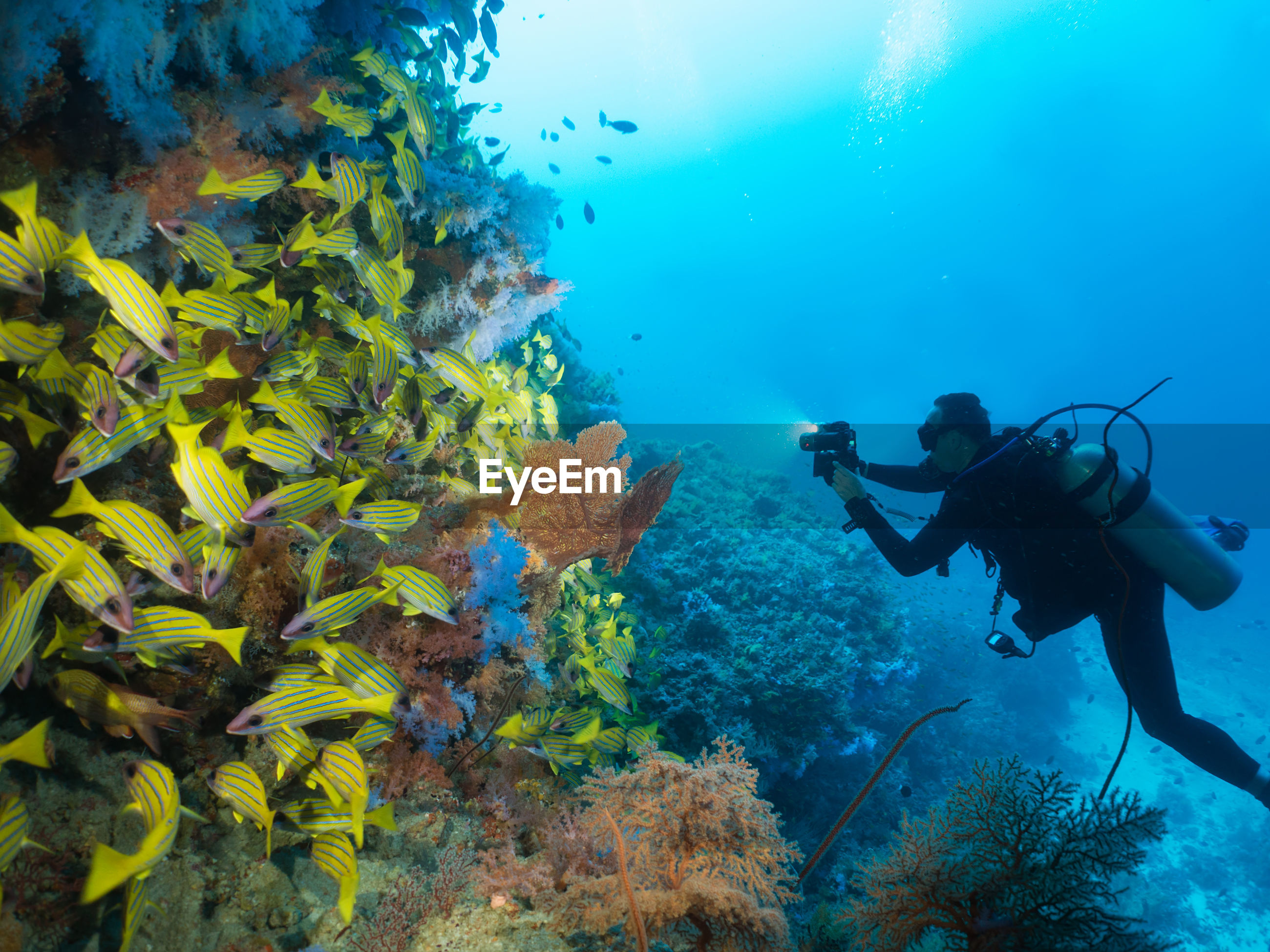 Man photographing school of fish while scuba diving undersea