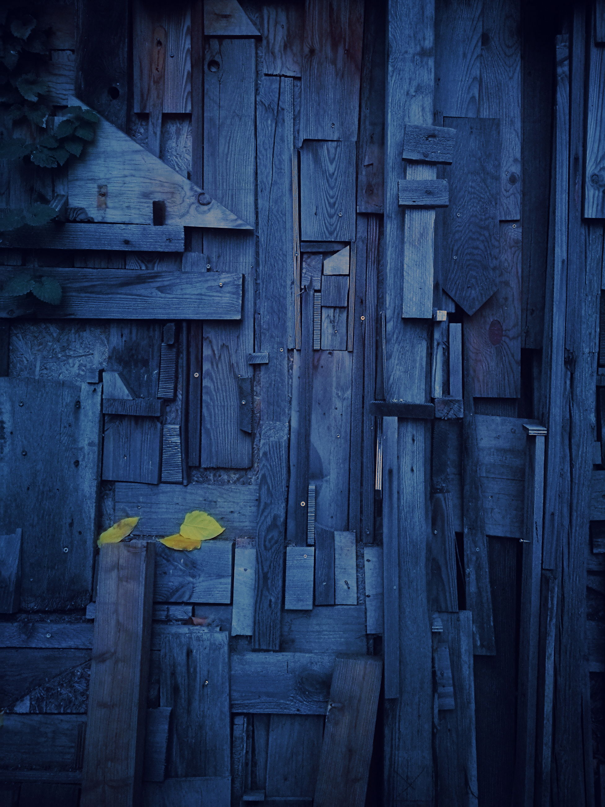 wood - material, architecture, built structure, no people, yellow, day, door, entrance, blue, building exterior, outdoors, old, nature, full frame, wall - building feature, wood, close-up, flower, flowering plant, abandoned