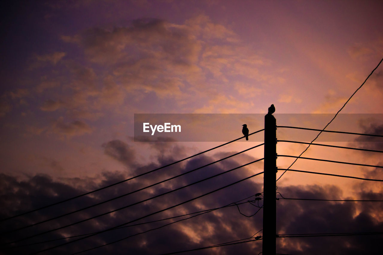 sunset, silhouette, sky, cloud - sky, cable, connection, low angle view, bird, nature, perching, outdoors, animal themes, beauty in nature, animals in the wild, electricity pylon, no people, telephone line, day