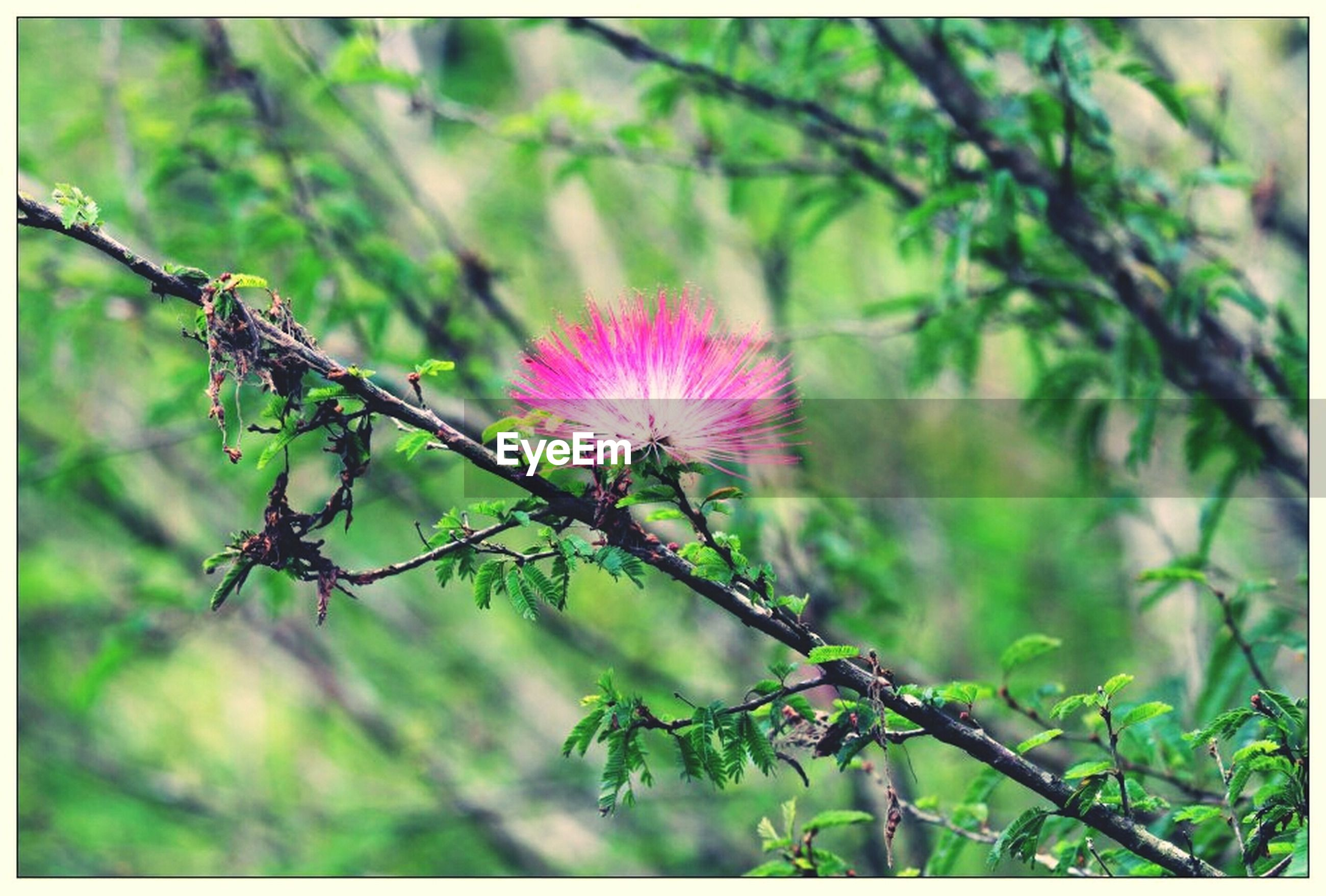 transfer print, flower, growth, focus on foreground, auto post production filter, branch, freshness, close-up, nature, fragility, plant, stem, beauty in nature, twig, bud, outdoors, day, botany, selective focus, tree