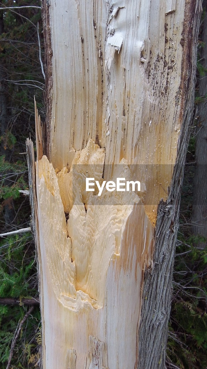 tree trunk, no people, wood - material, nature, day, tree, outdoors, close-up