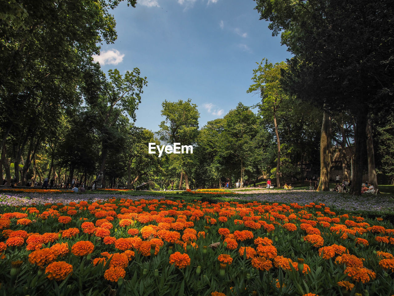 plant, tree, growth, flower, beauty in nature, flowering plant, nature, freshness, fragility, vulnerability, sky, no people, land, tranquility, day, field, green color, scenics - nature, orange color, park, outdoors, flowerbed, springtime, flower head