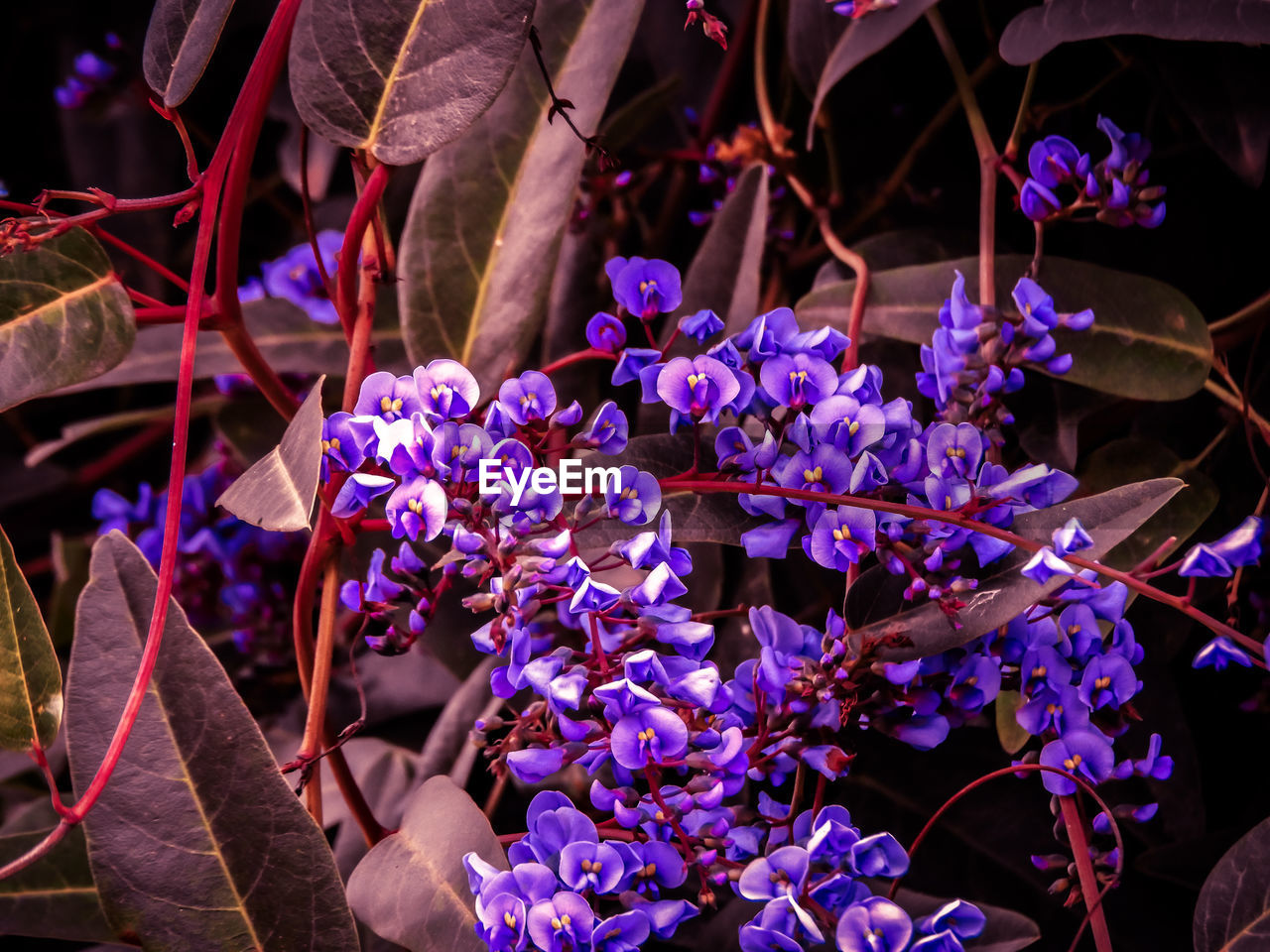 flowering plant, flower, plant, fragility, vulnerability, freshness, purple, beauty in nature, petal, growth, close-up, nature, day, focus on foreground, outdoors, selective focus, inflorescence, flower head, plant part, leaf, springtime