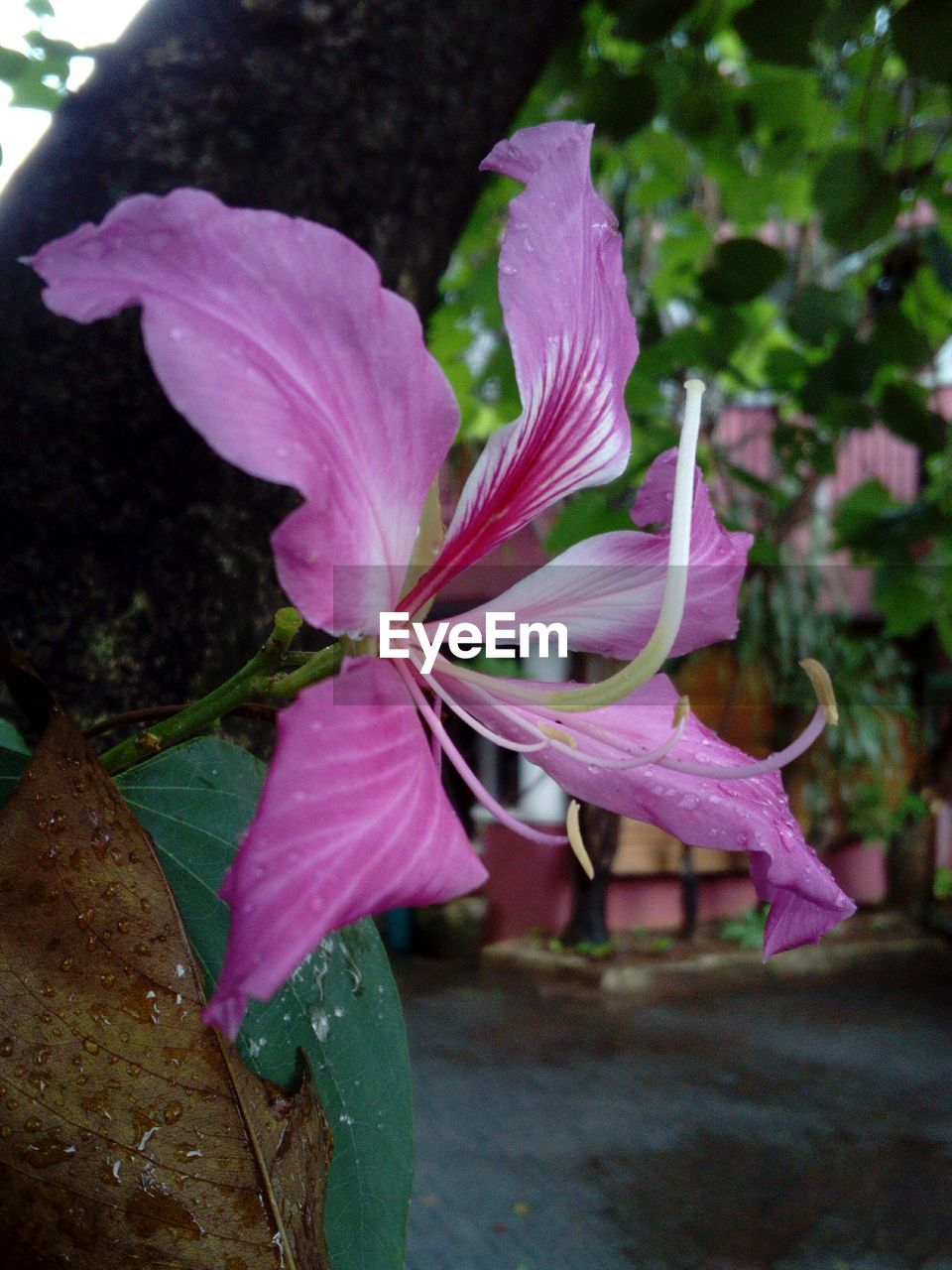 flower, petal, growth, fragility, nature, no people, plant, close-up, outdoors, beauty in nature, freshness, blooming, flower head, day