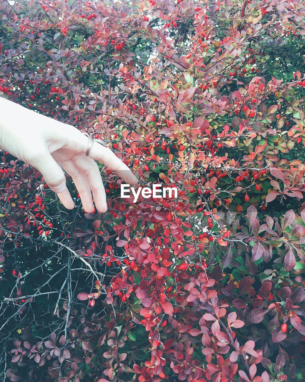 human hand, hand, real people, one person, plant, human body part, growth, freshness, finger, human finger, flower, nature, flowering plant, body part, lifestyles, day, touching, plant part, fragility, outdoors