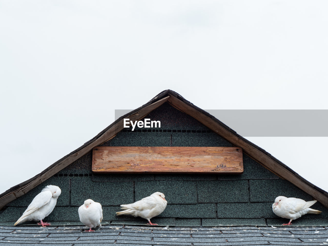 bird, vertebrate, architecture, animal, group of animals, animal themes, built structure, animal wildlife, animals in the wild, sky, no people, copy space, building exterior, white color, day, nature, clear sky, perching, wood - material, outdoors, seagull