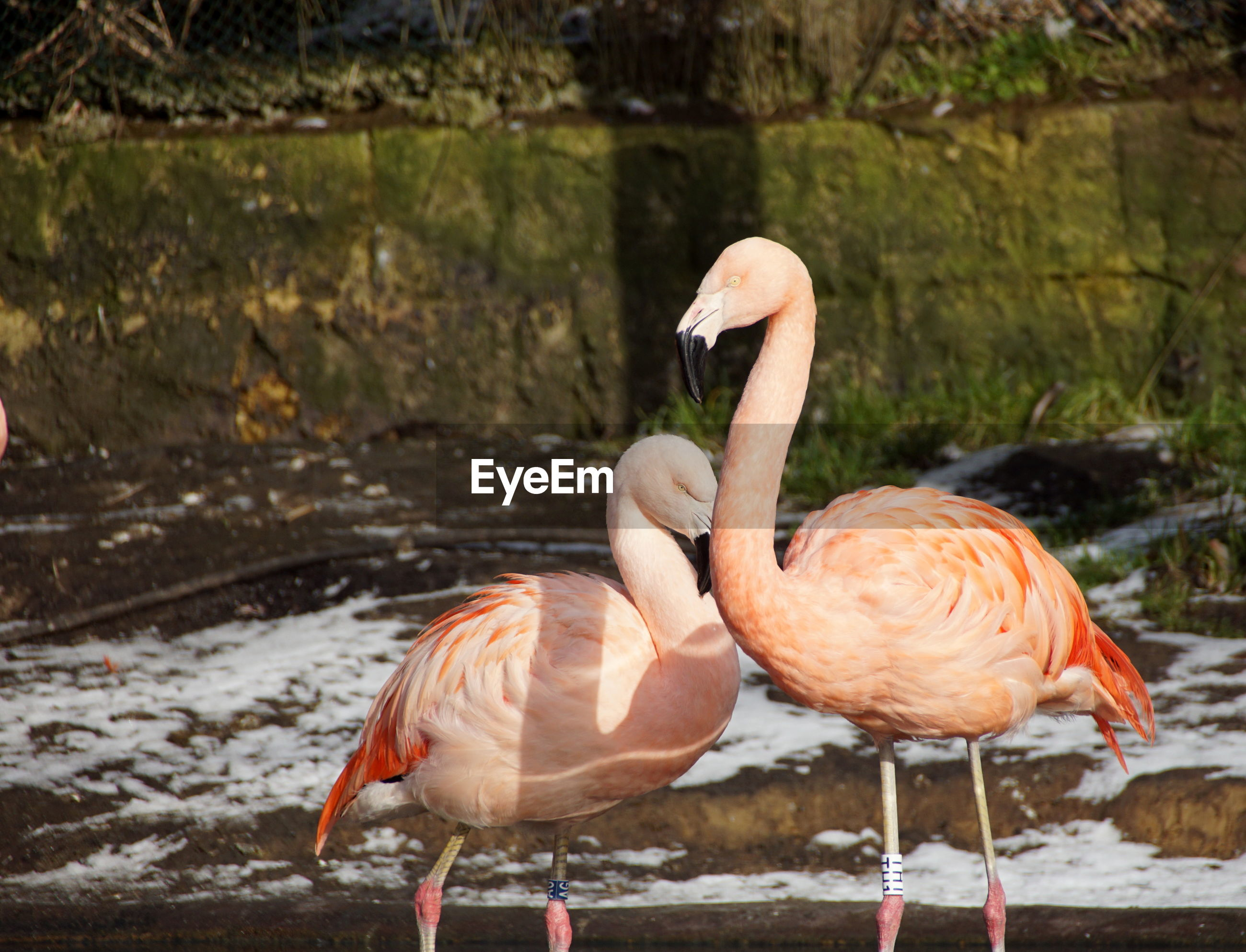 Close-up of flamingo in lake